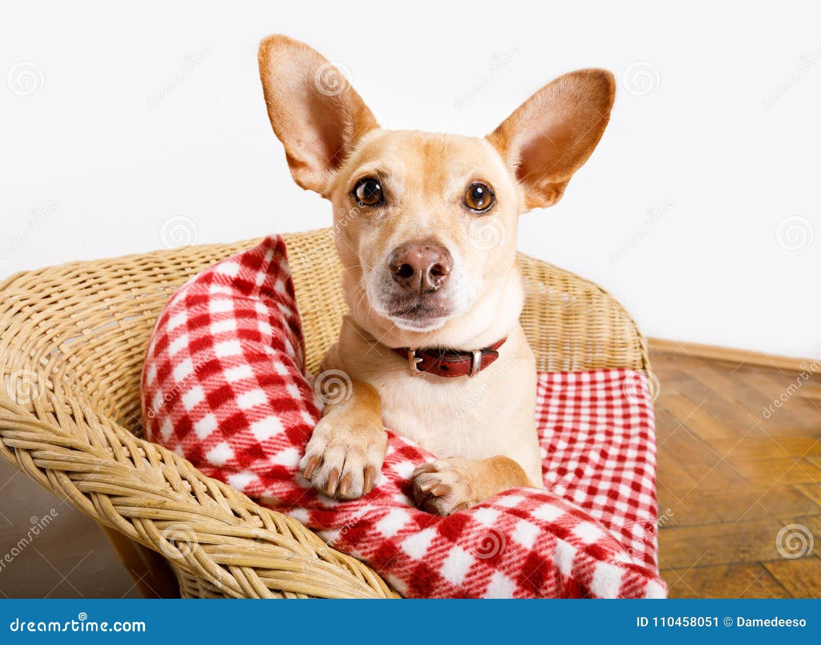 Hund som vilar i säng med filten
