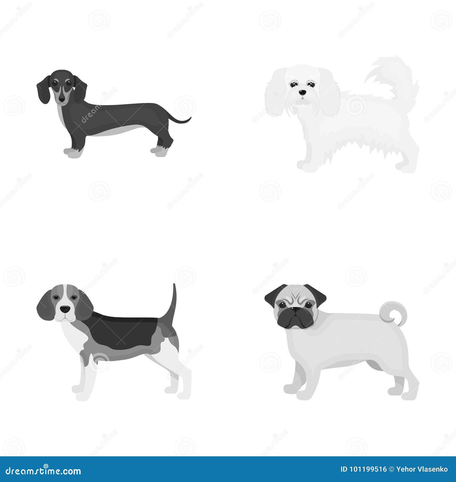 Hund, Tier, inländisch und andere Netzikone in der einfarbigen Art Dachshund, maltesisch, Bulldoggenikonen in der Satzsammlung