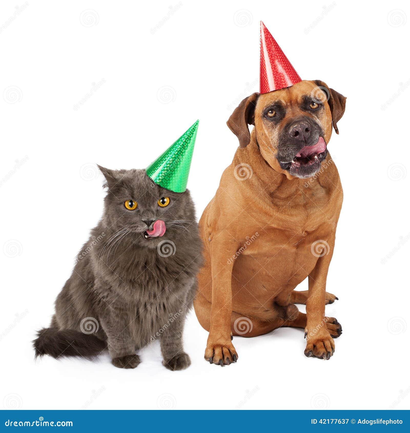 Hund Und Cat Wearing Birthday Hat Lecken Lippen