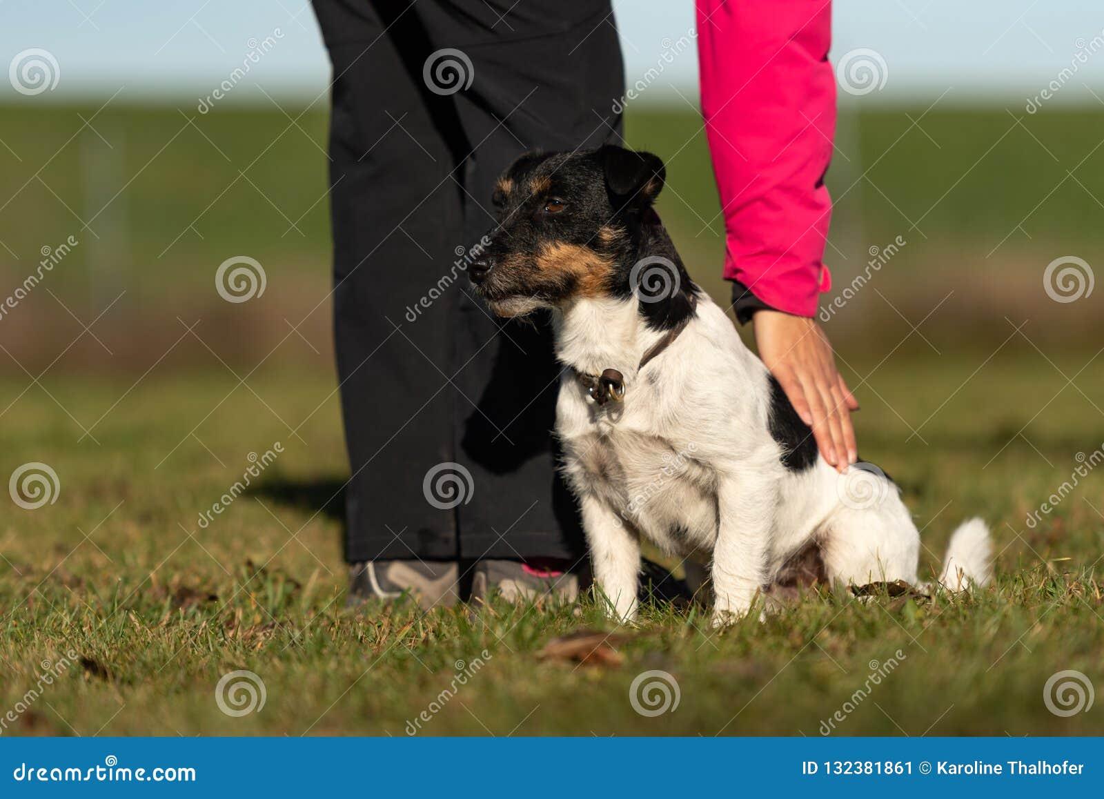 Hund und Inhaber Sport mit einem ergebenen Steckfassungsrussell-Terrier