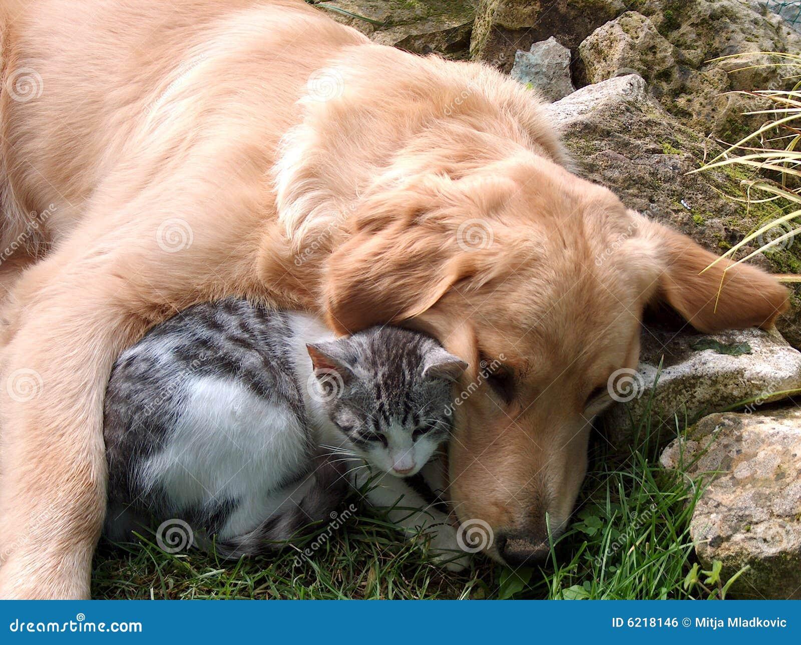 Notruf Hafenkante Hund Und Katze