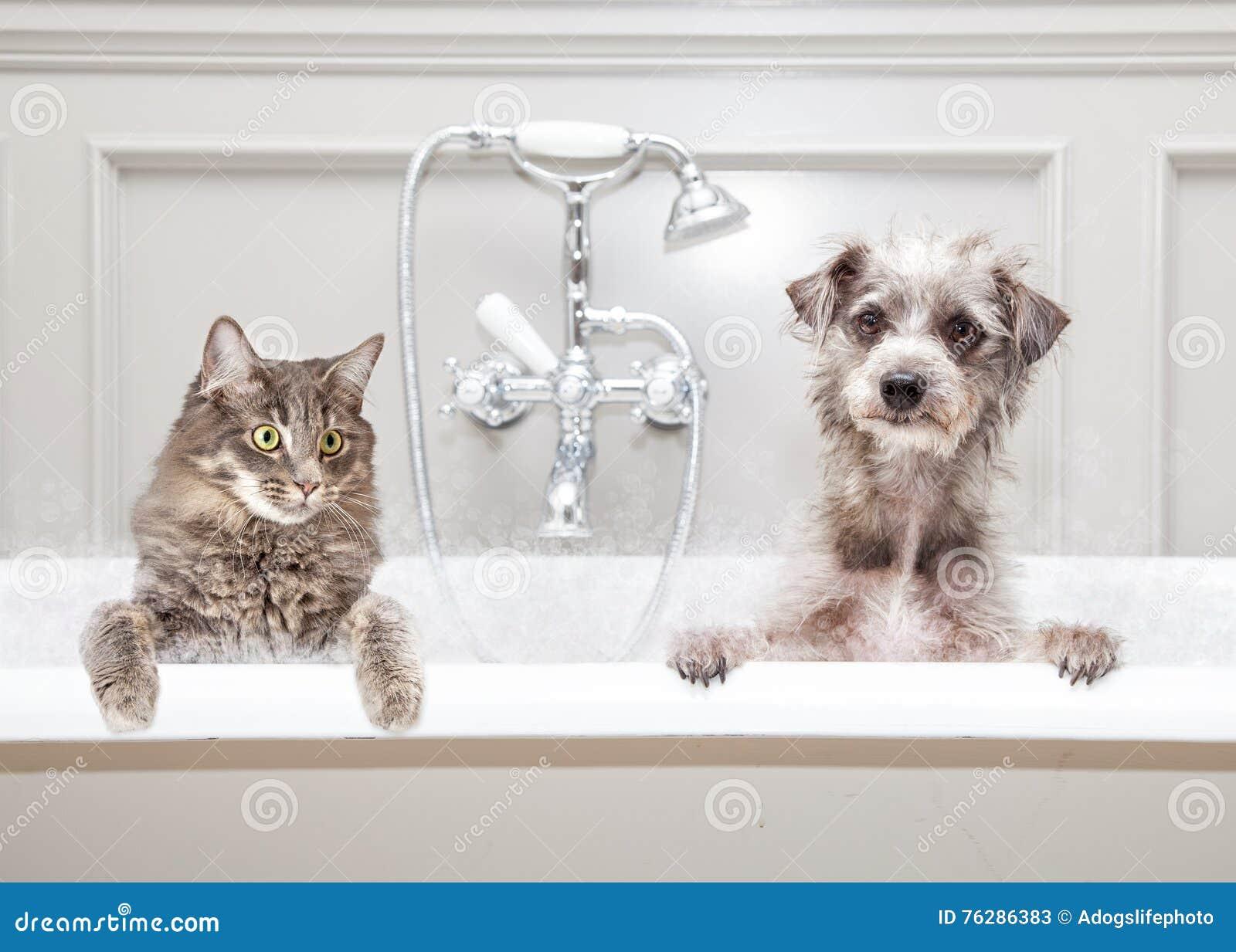 Hund Und Katze In Der Badewanne Zusammen Stockbild Bild Von Sauber