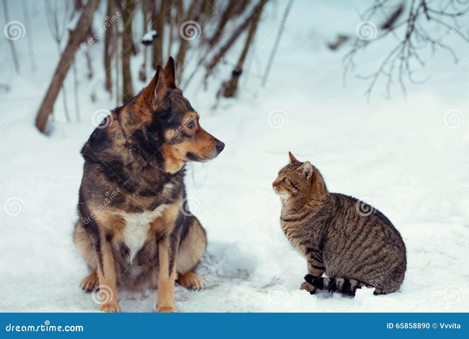 hund und katze die zusammen im schnee sitzen stockfoto. Black Bedroom Furniture Sets. Home Design Ideas
