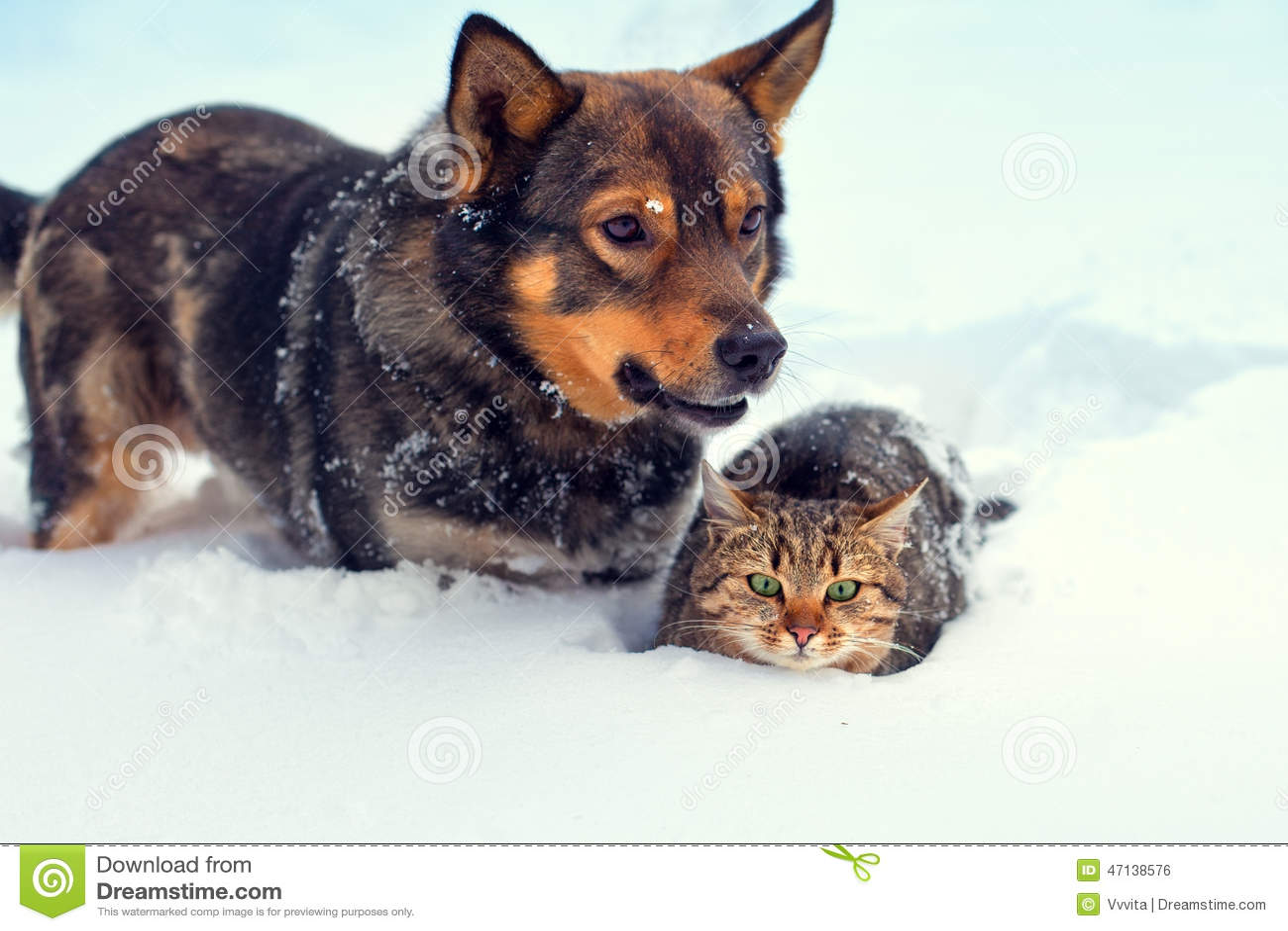 hund und katze im schnee stockfoto bild von garten kalt. Black Bedroom Furniture Sets. Home Design Ideas