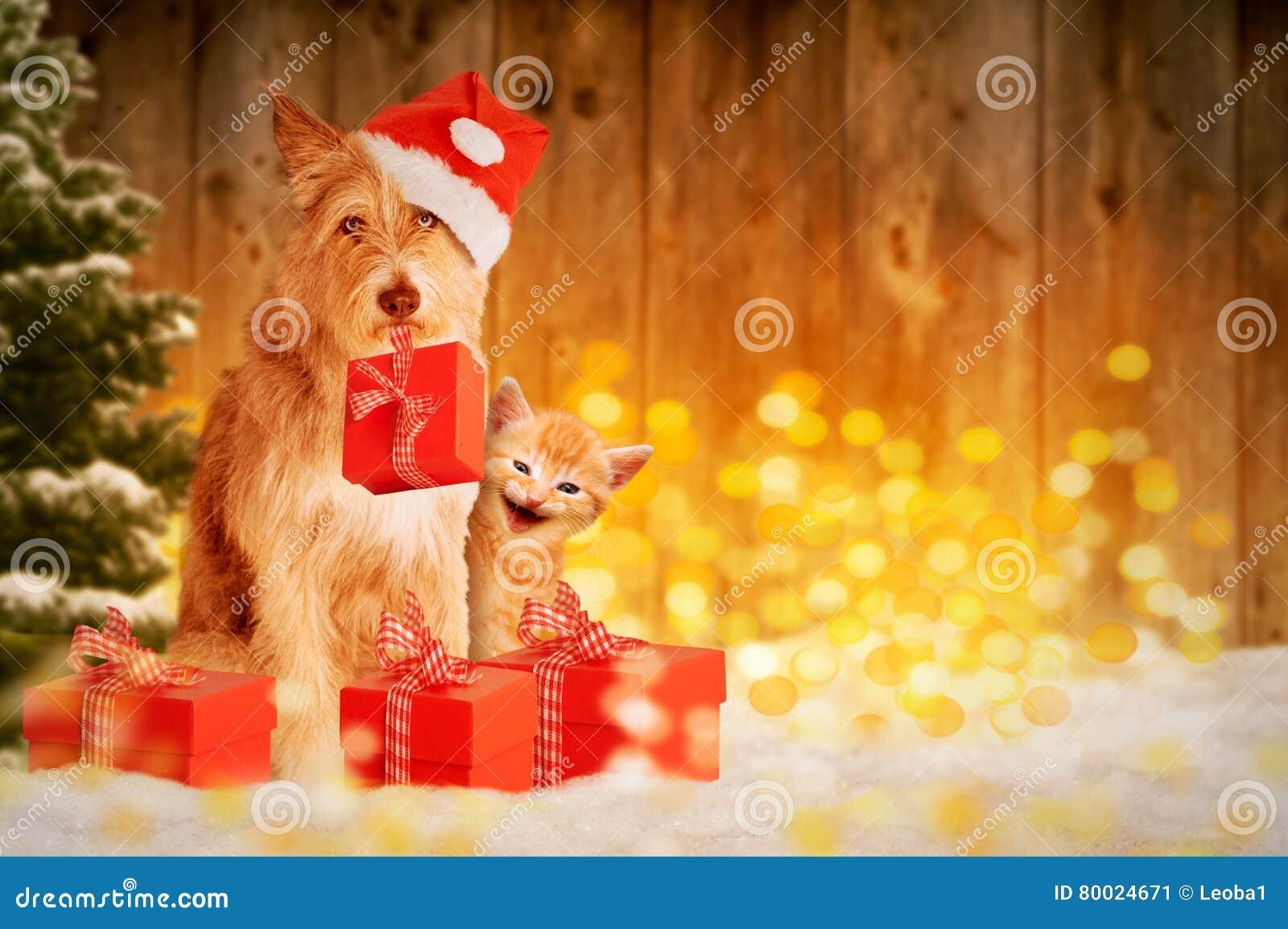 Hund Und Katze Am Weihnachten Mit Geschenken Stockbild - Bild von ...