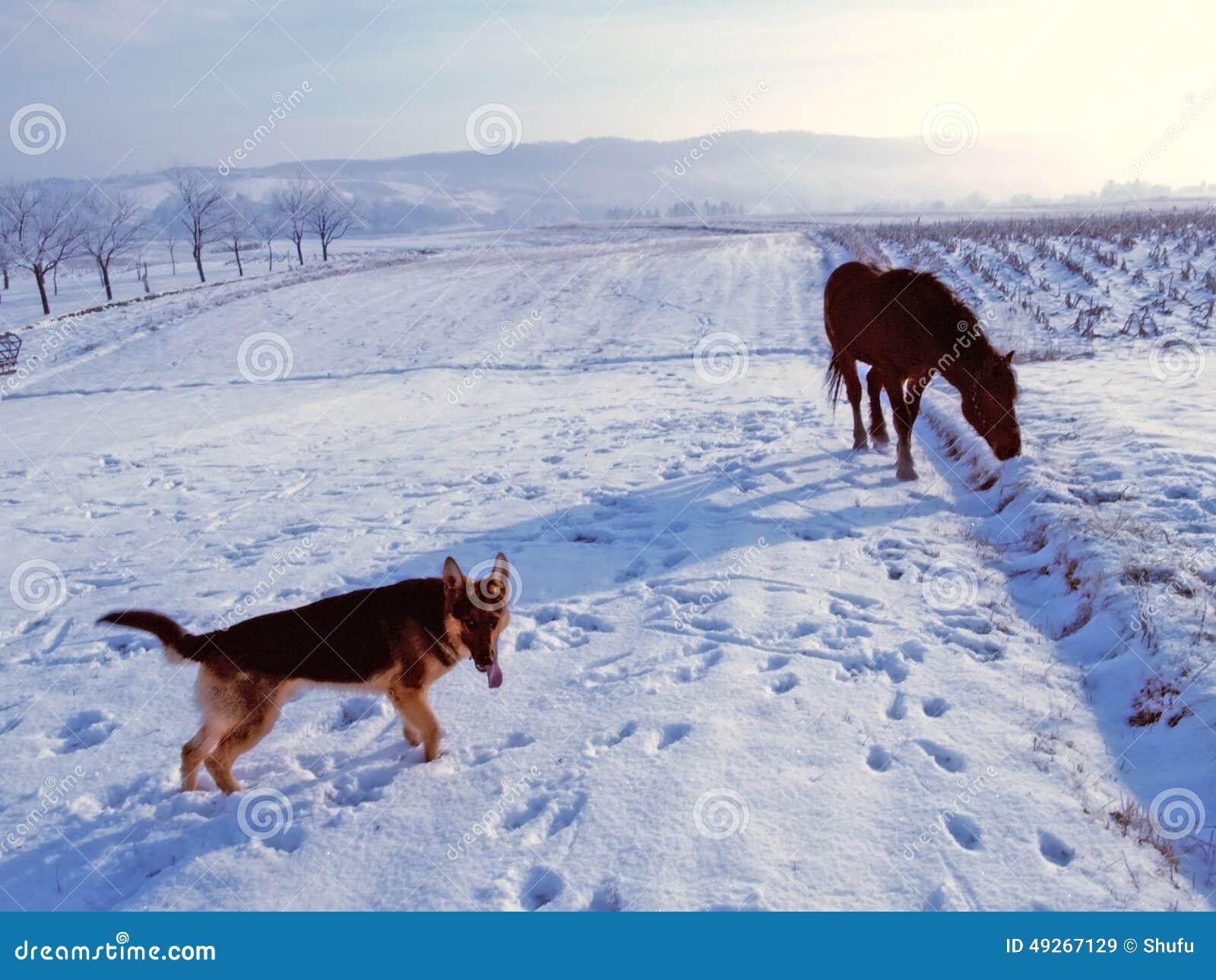 hund und pferd stockbild bild von morgen leuchte tiere