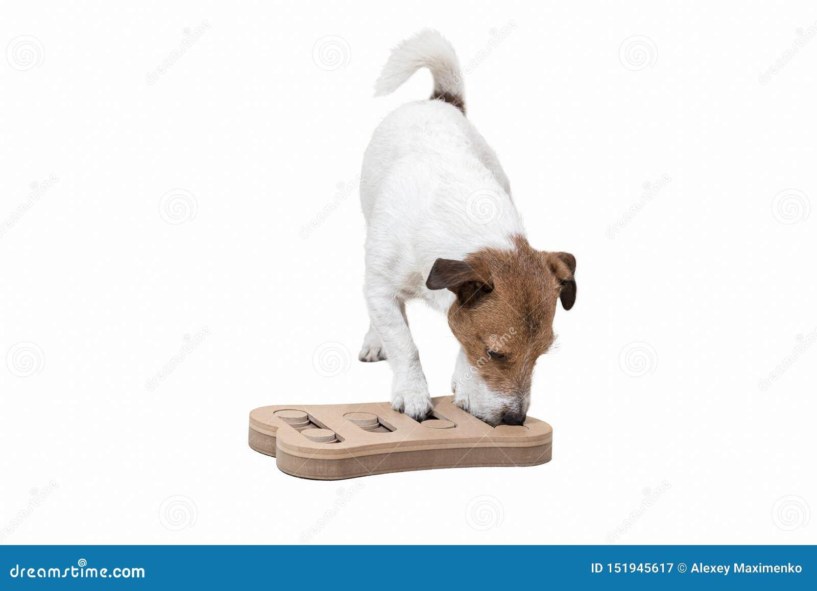 Hund während der geistlich Stimulierungstätigkeit mit Puzzlespielschnüffelnspiel