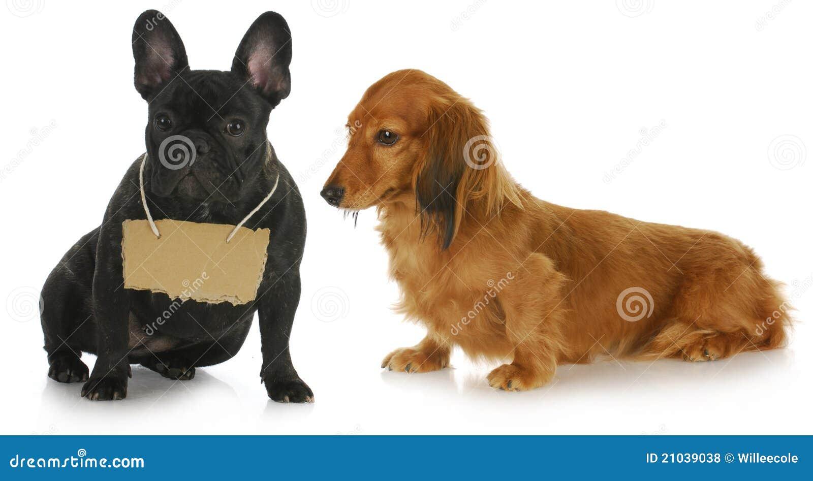 Hund zwei mit einer Meldung