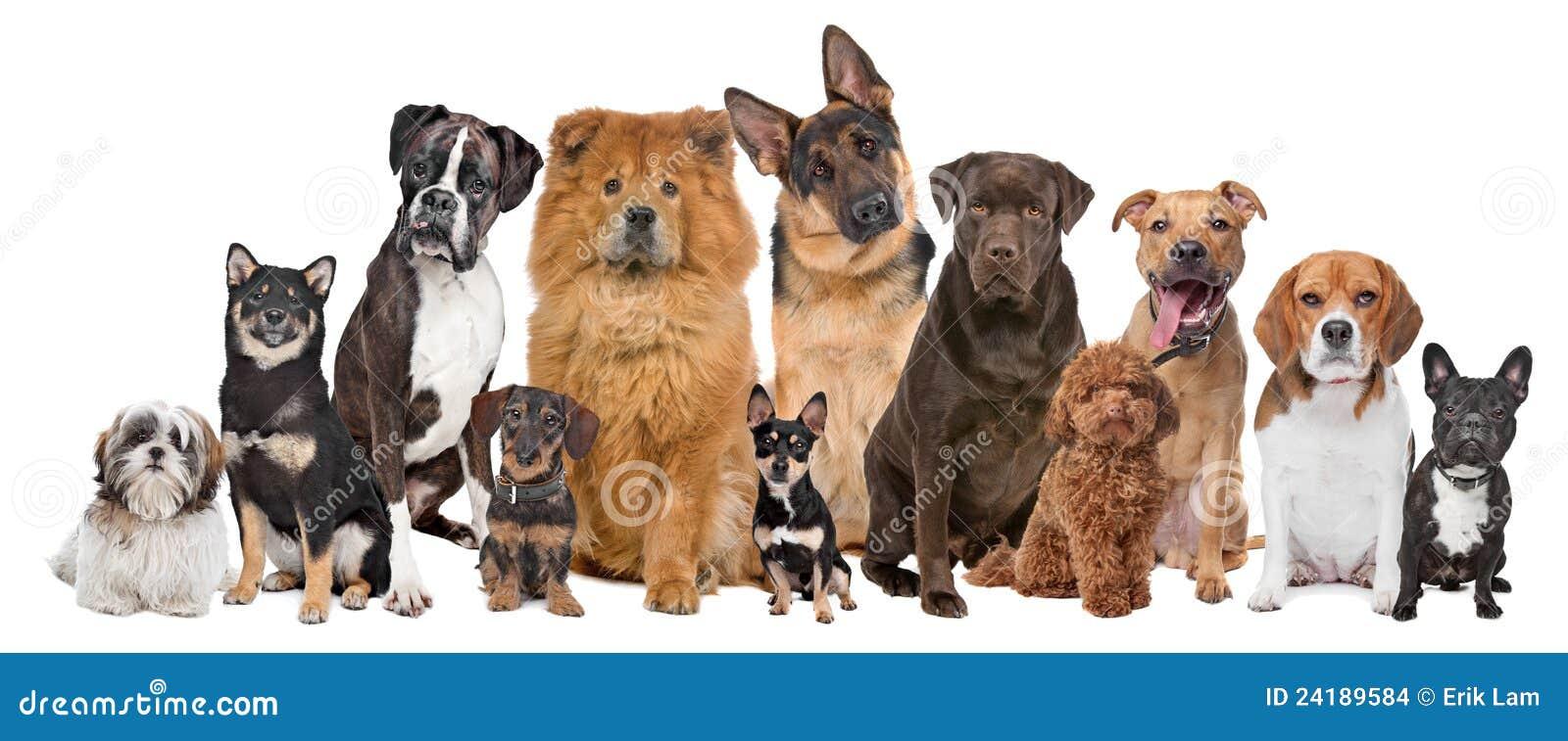 Hundar grupperar tolv
