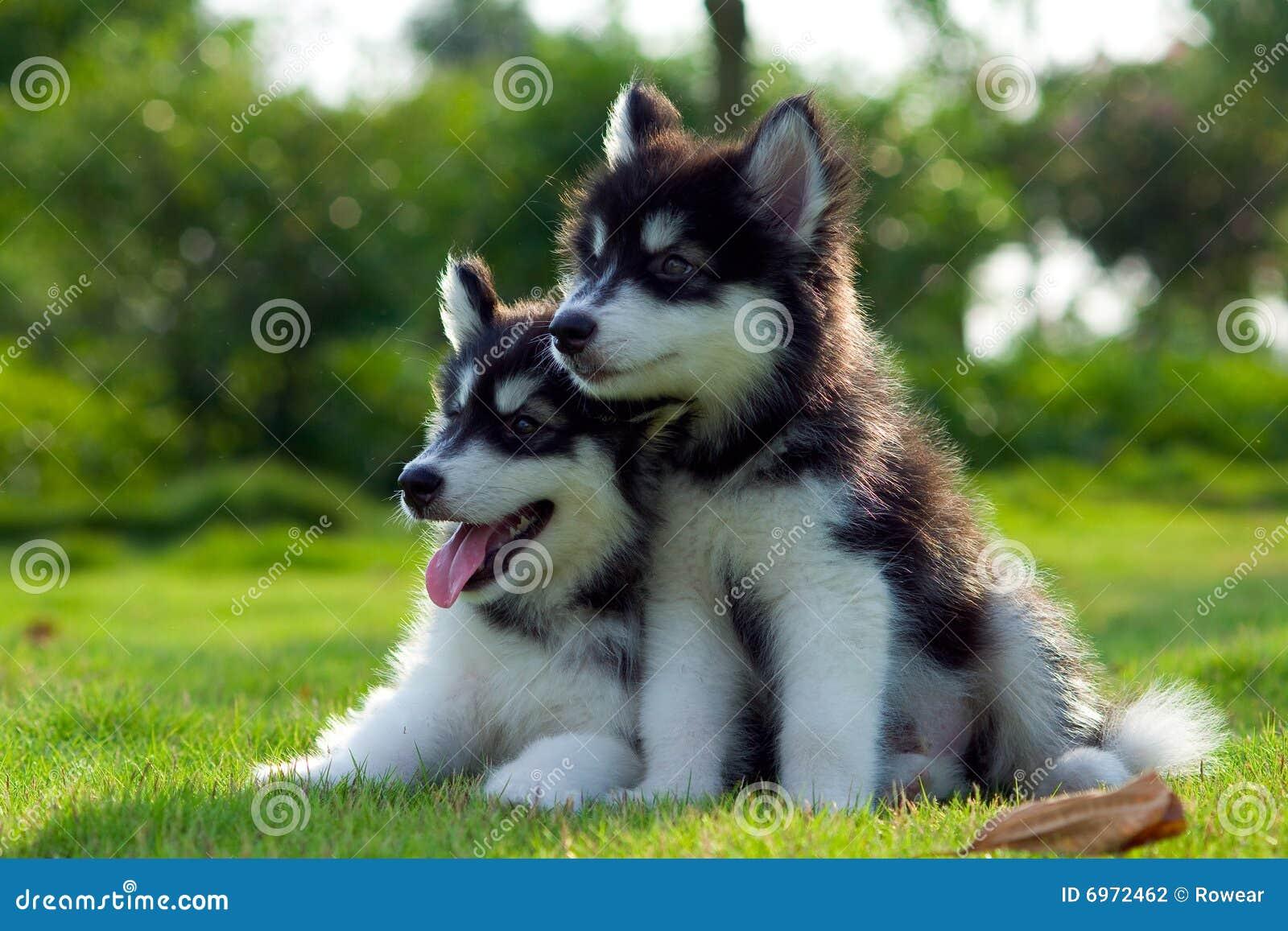 Hundar little