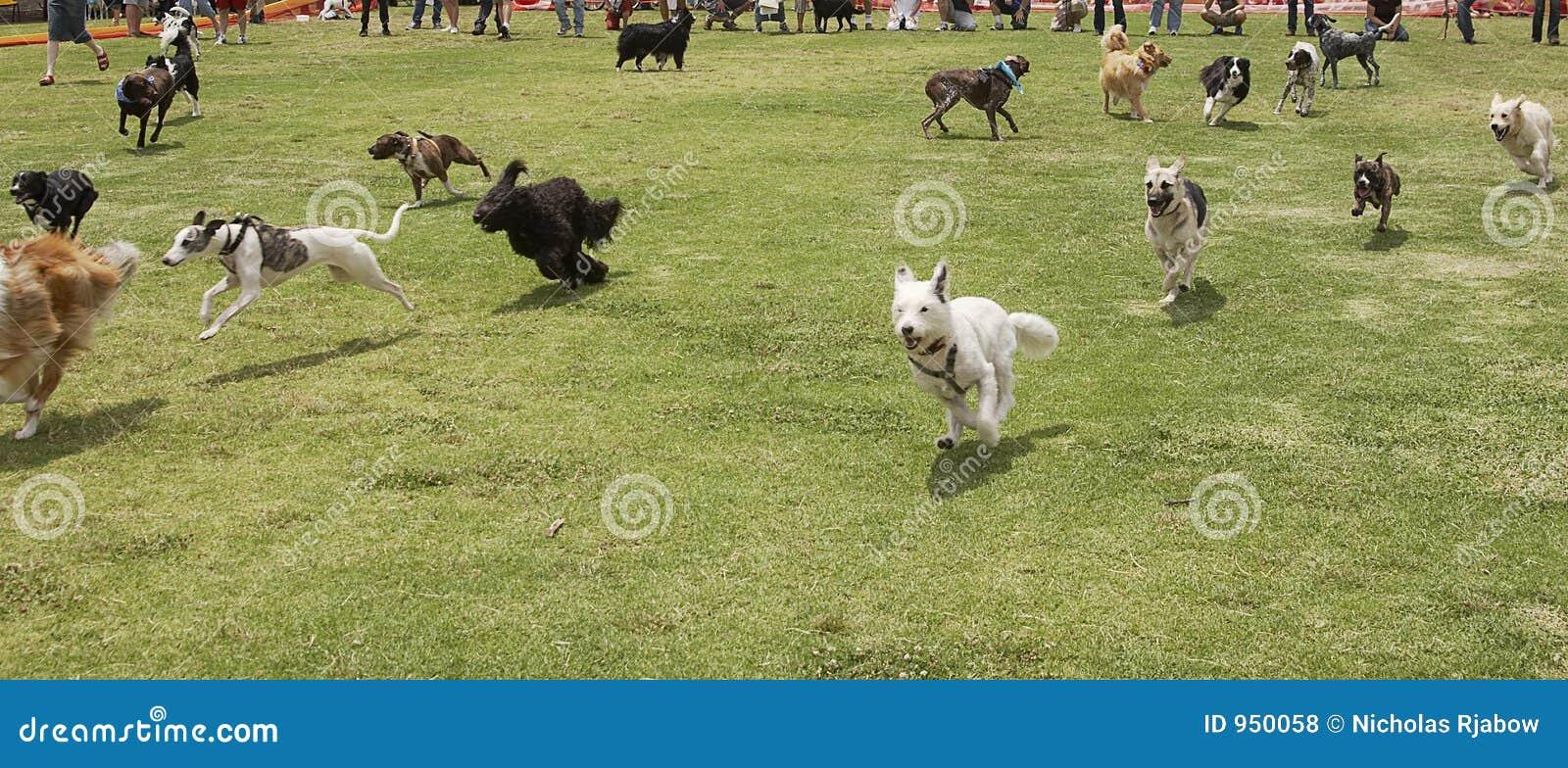 Hundar loose