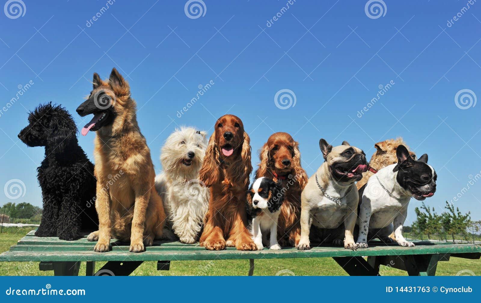 Hundar nio