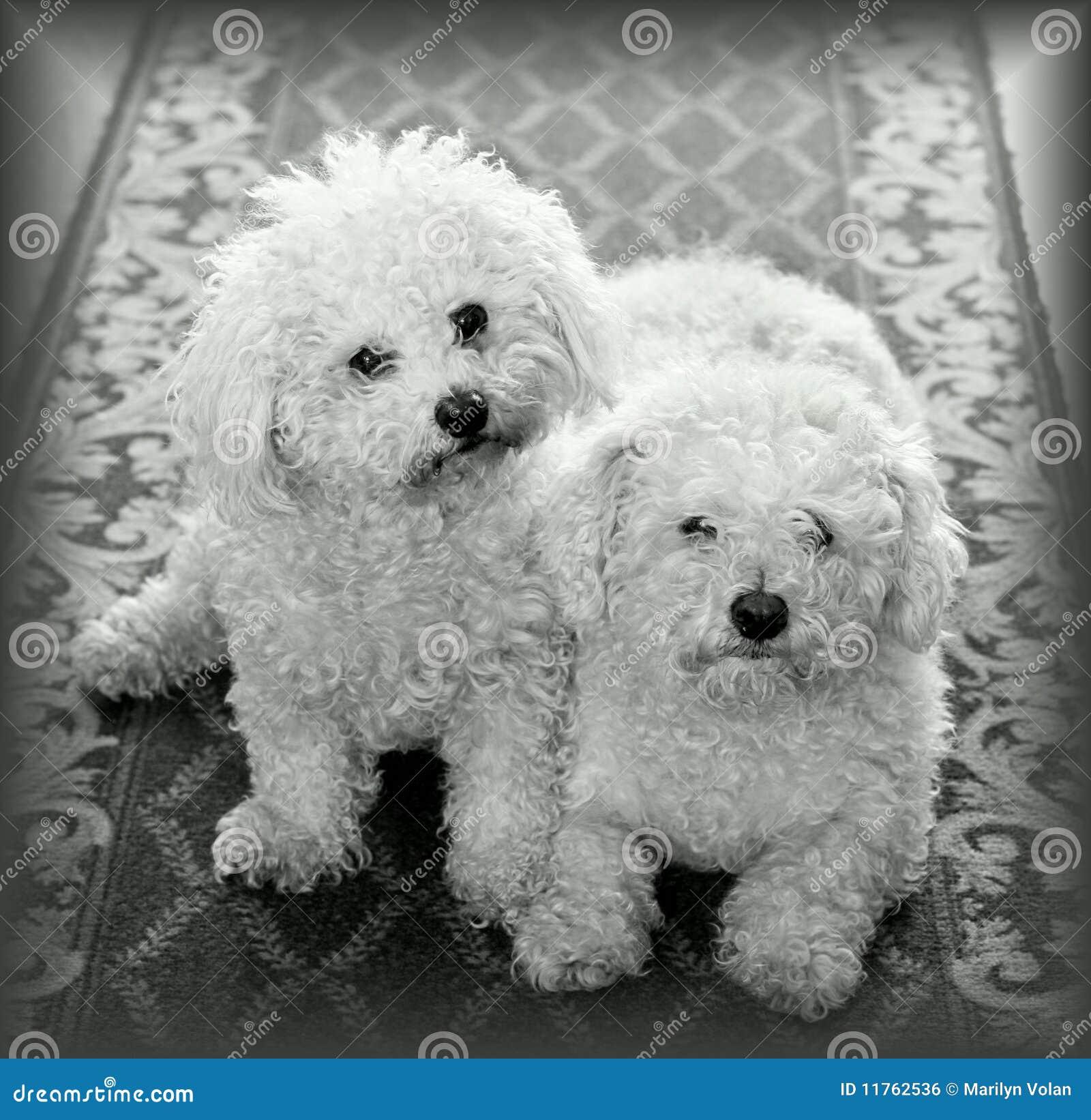 Hundar returnerar