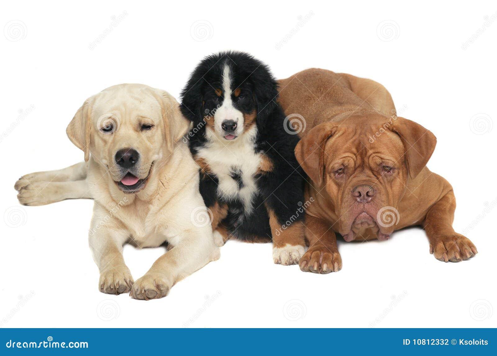 Hundar tre