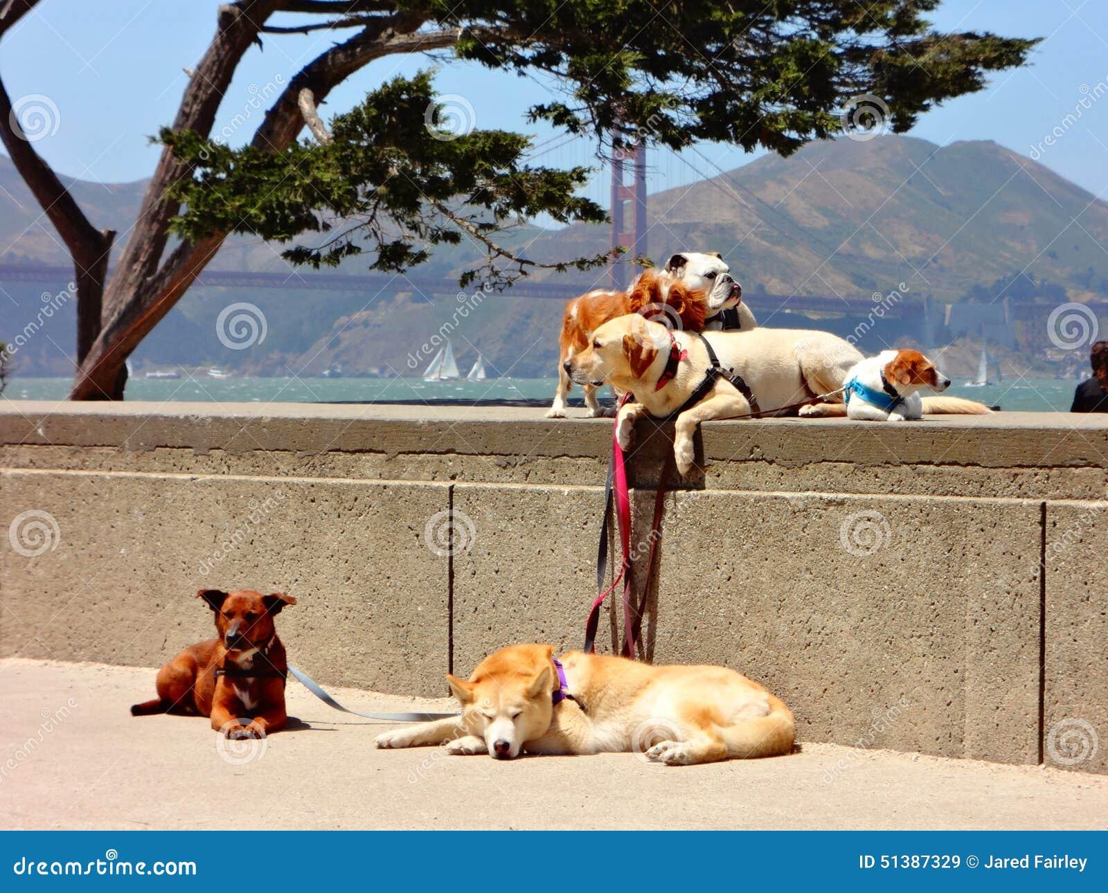 Hunde auf Leinen in San Francisco