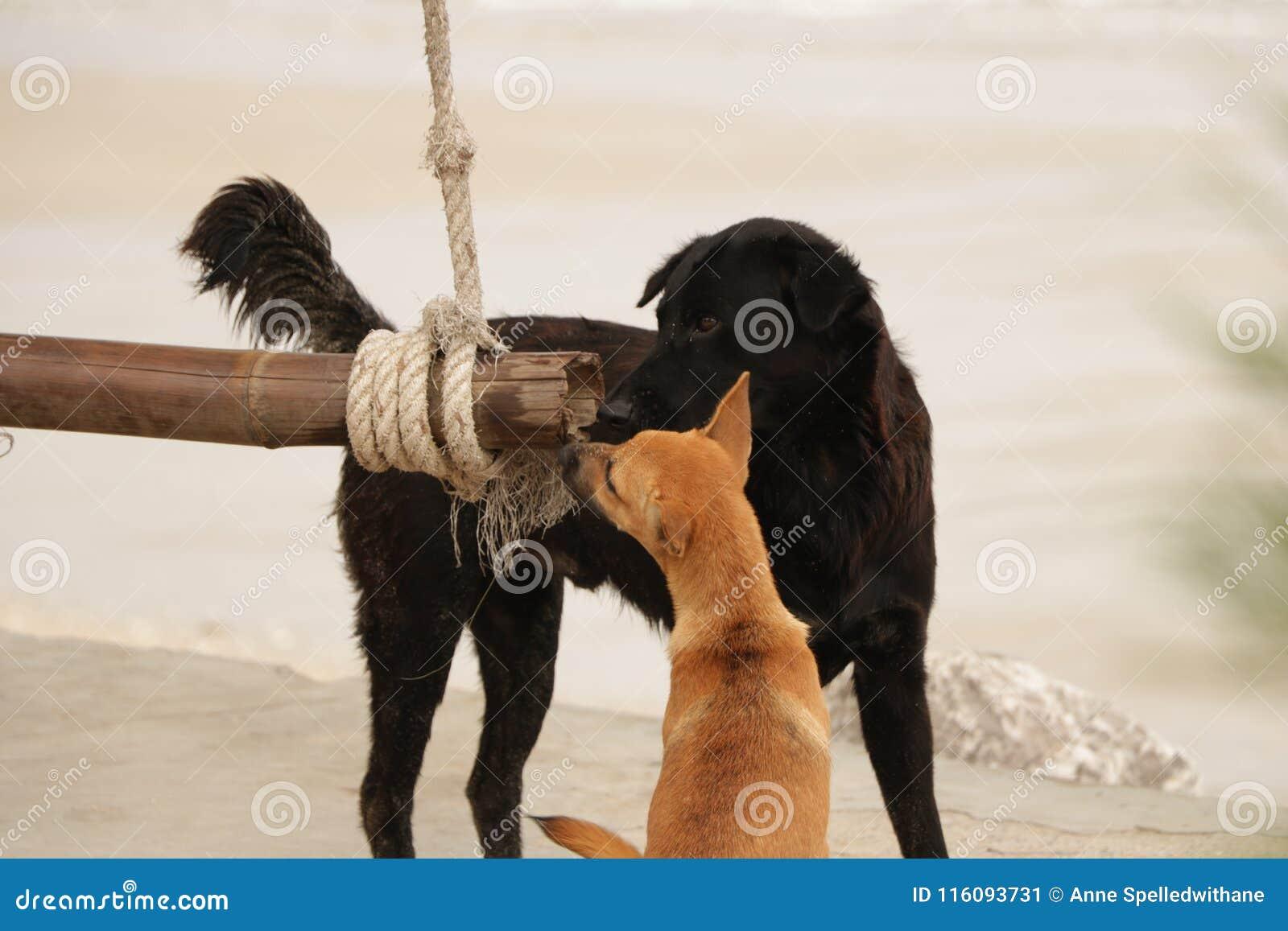 Hunde, die hölzernes Schwingen auf dem Strand teilen