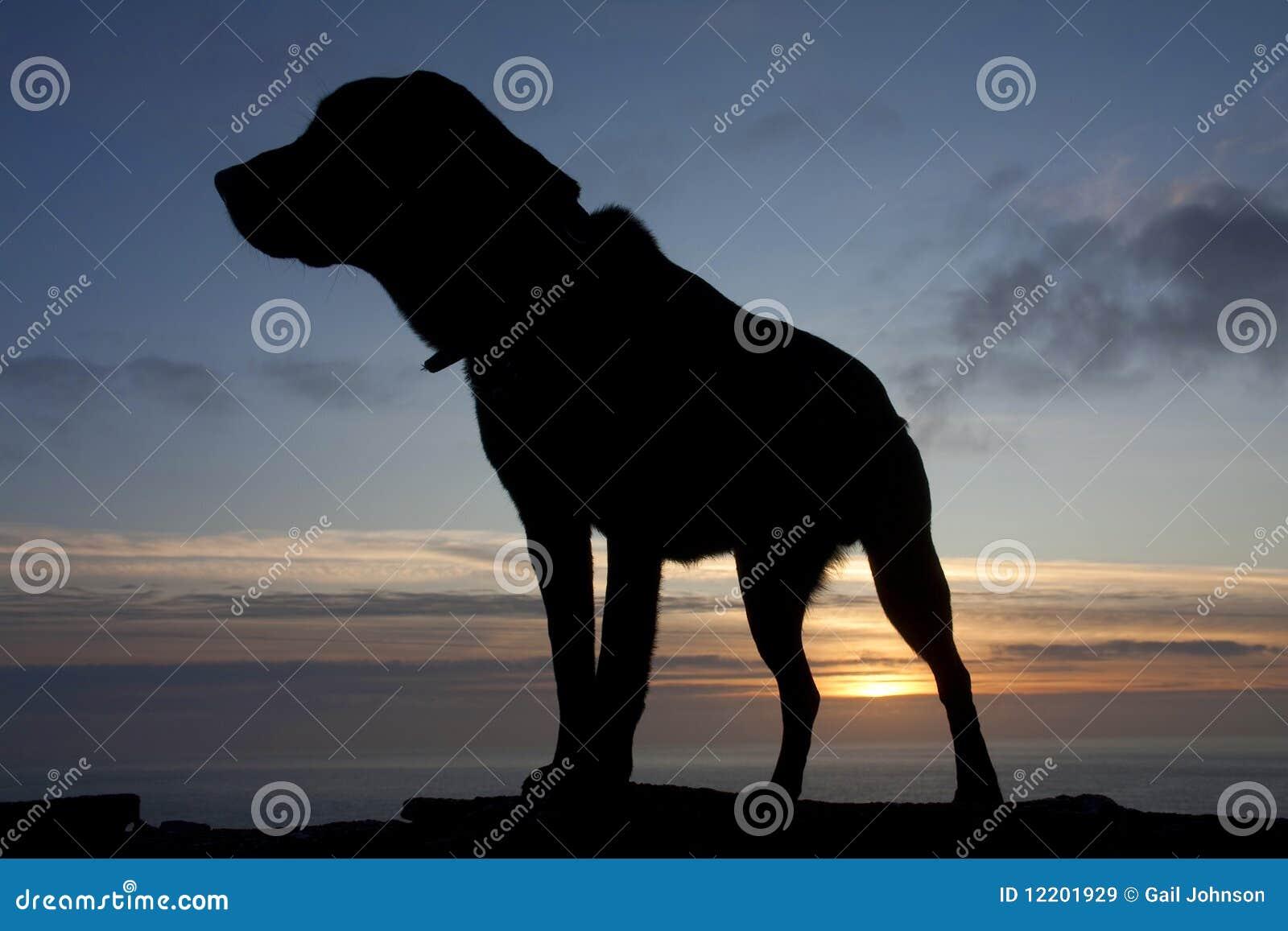 Hunde am Sonnenuntergang