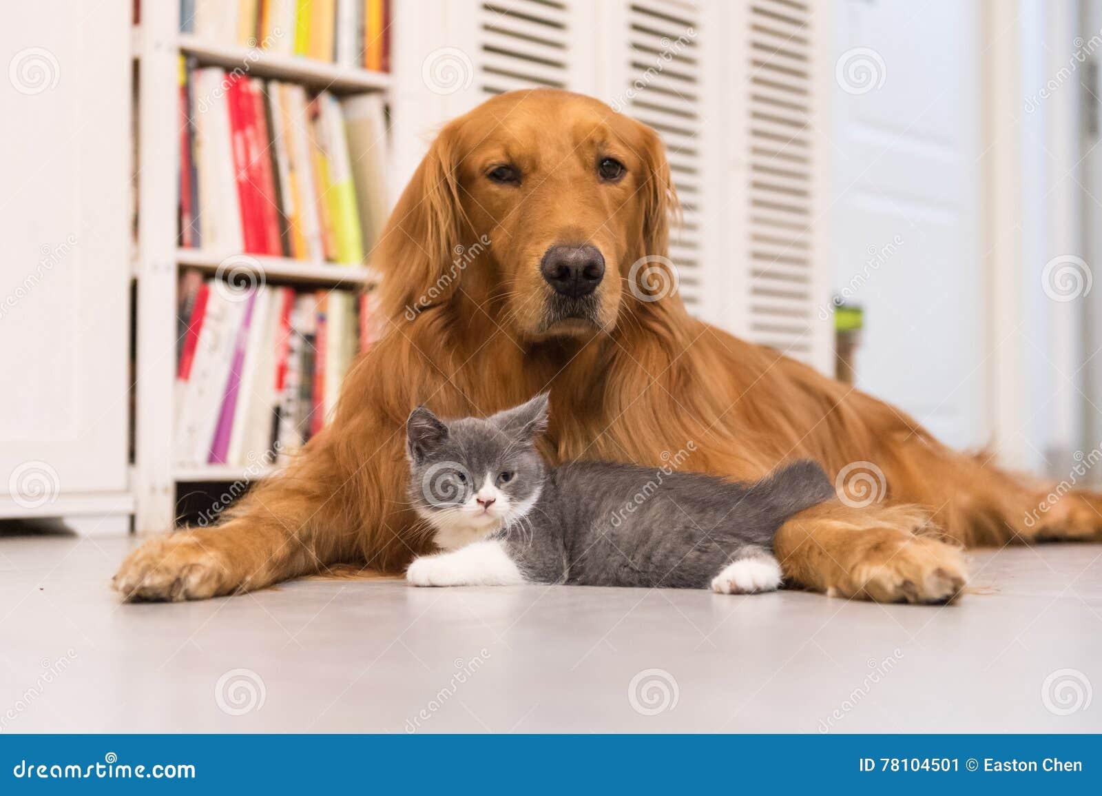 hunde und katzen stockbild bild von innen tier