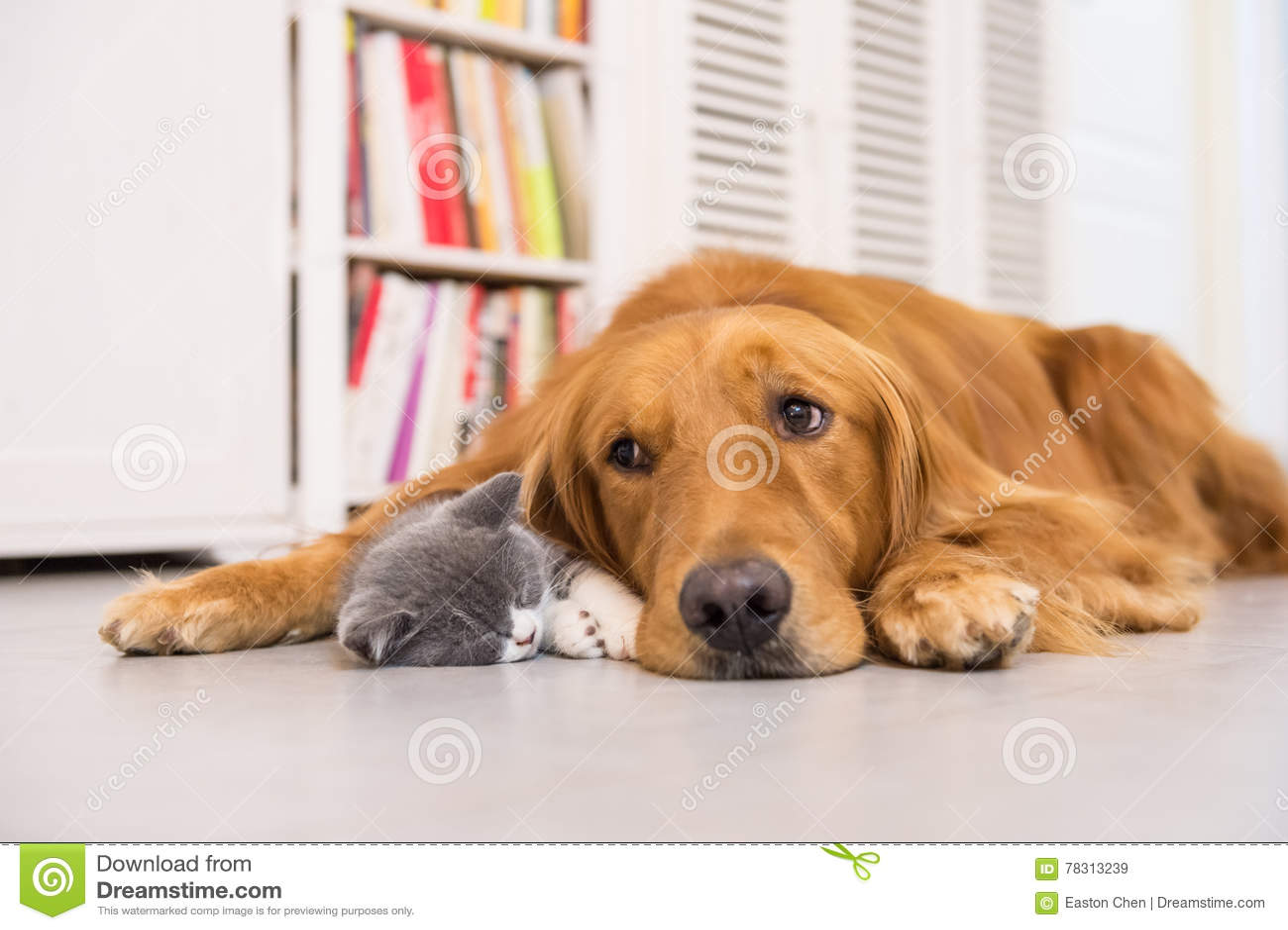 hunde und katzen stockbild bild von innen säugetiere