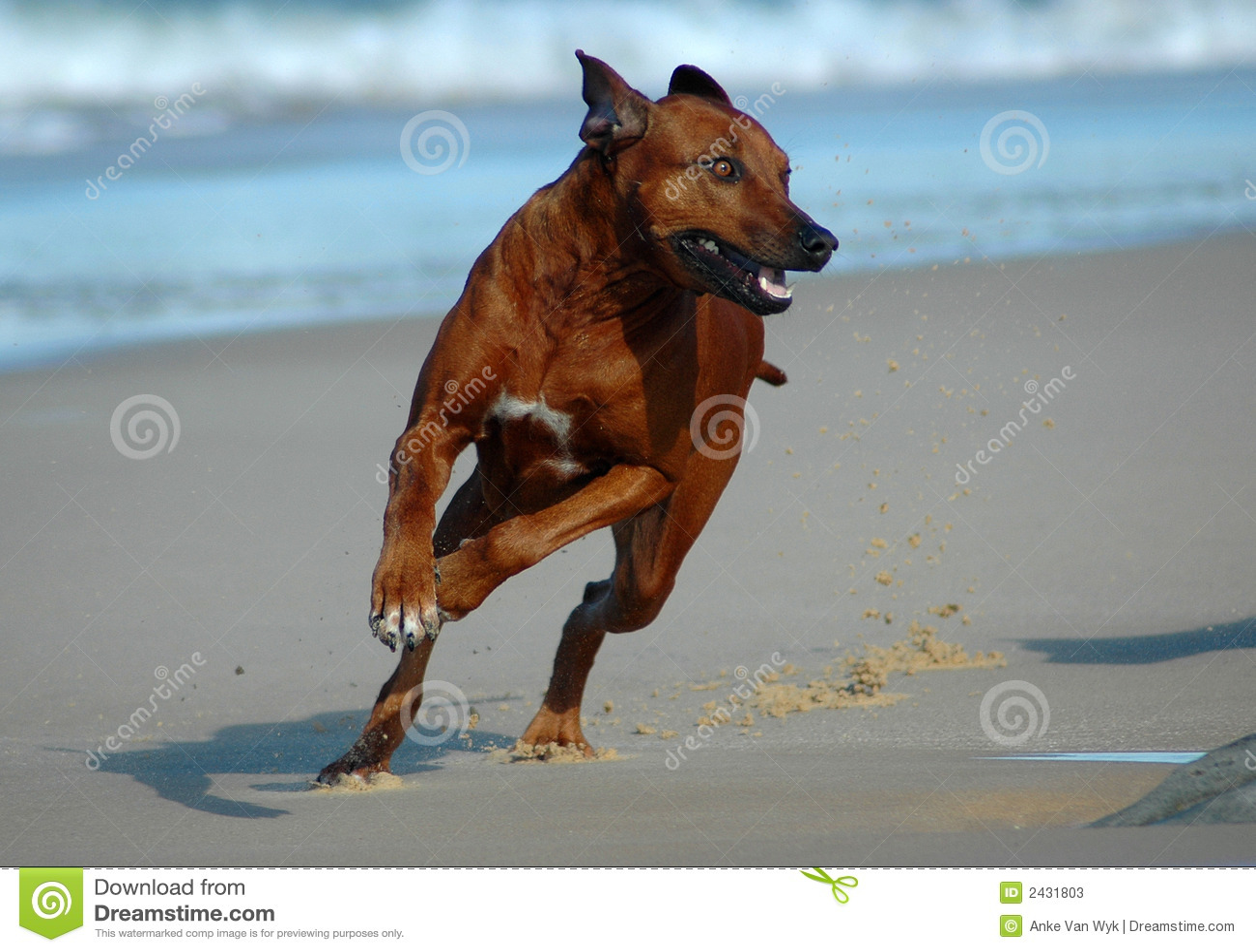 Hundebetrieb