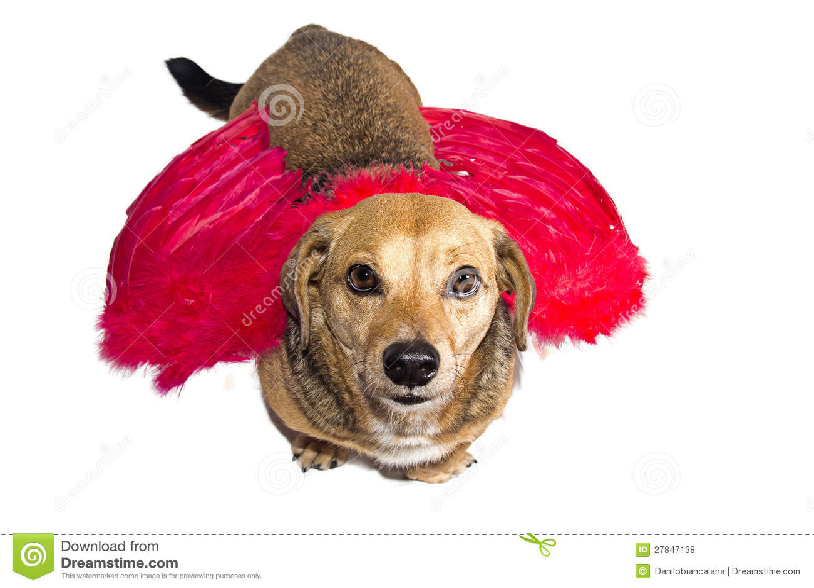 hundeengel