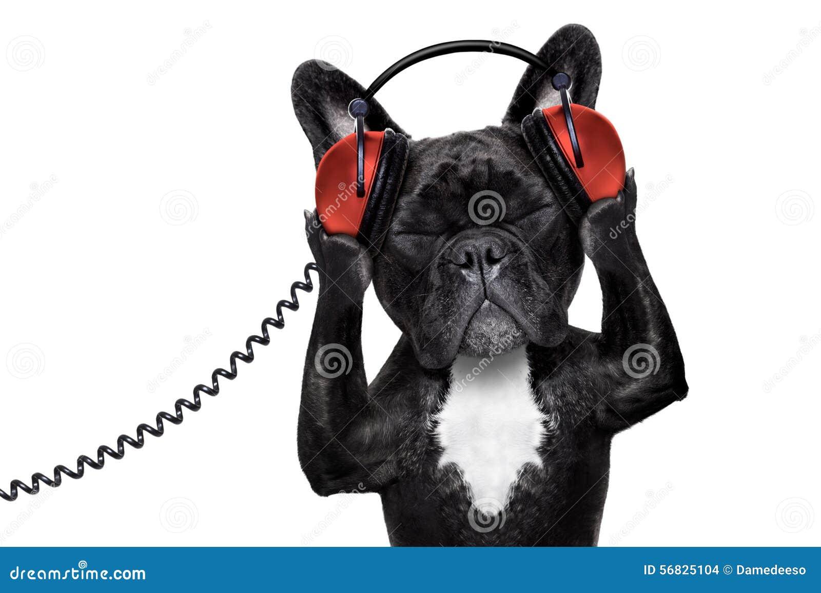 Hundehörende Musik