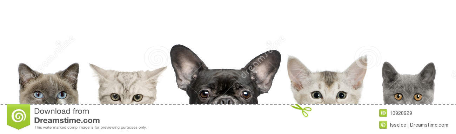 Hundekopf- und -katzeköpfe