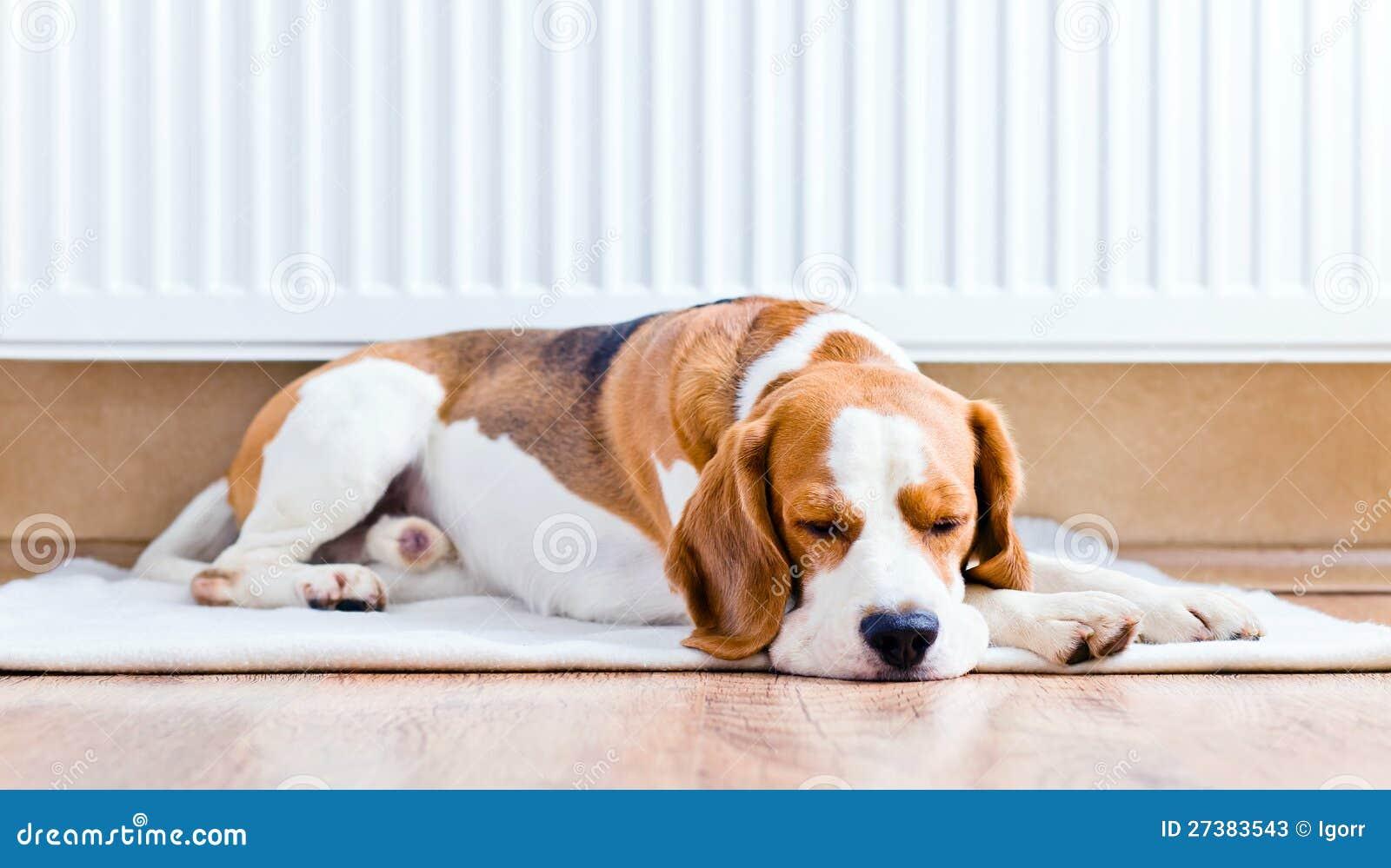 Hunden nära till ett varmt element