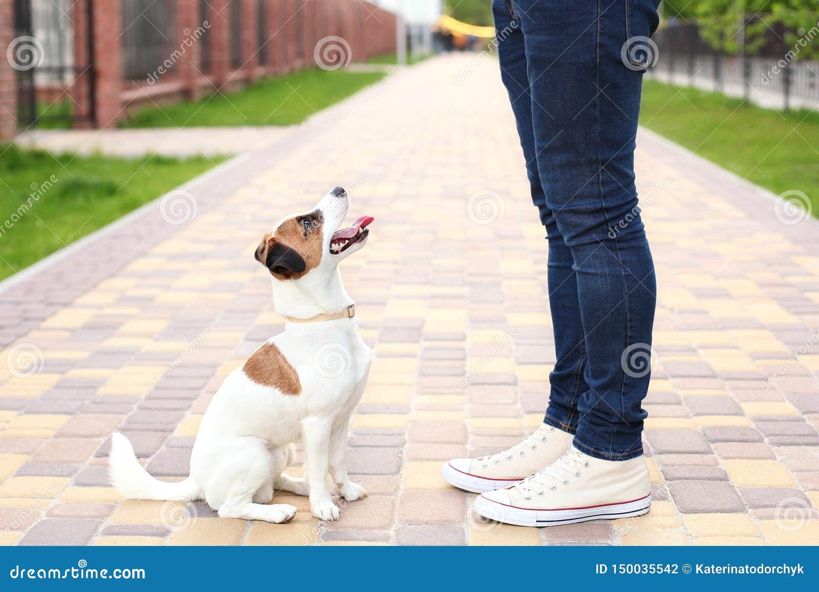 Hunden och ägaren Jack Russell Terrier i förväntan av går i parkerar, på gatan, patienten och lydigt Utbildning och drev