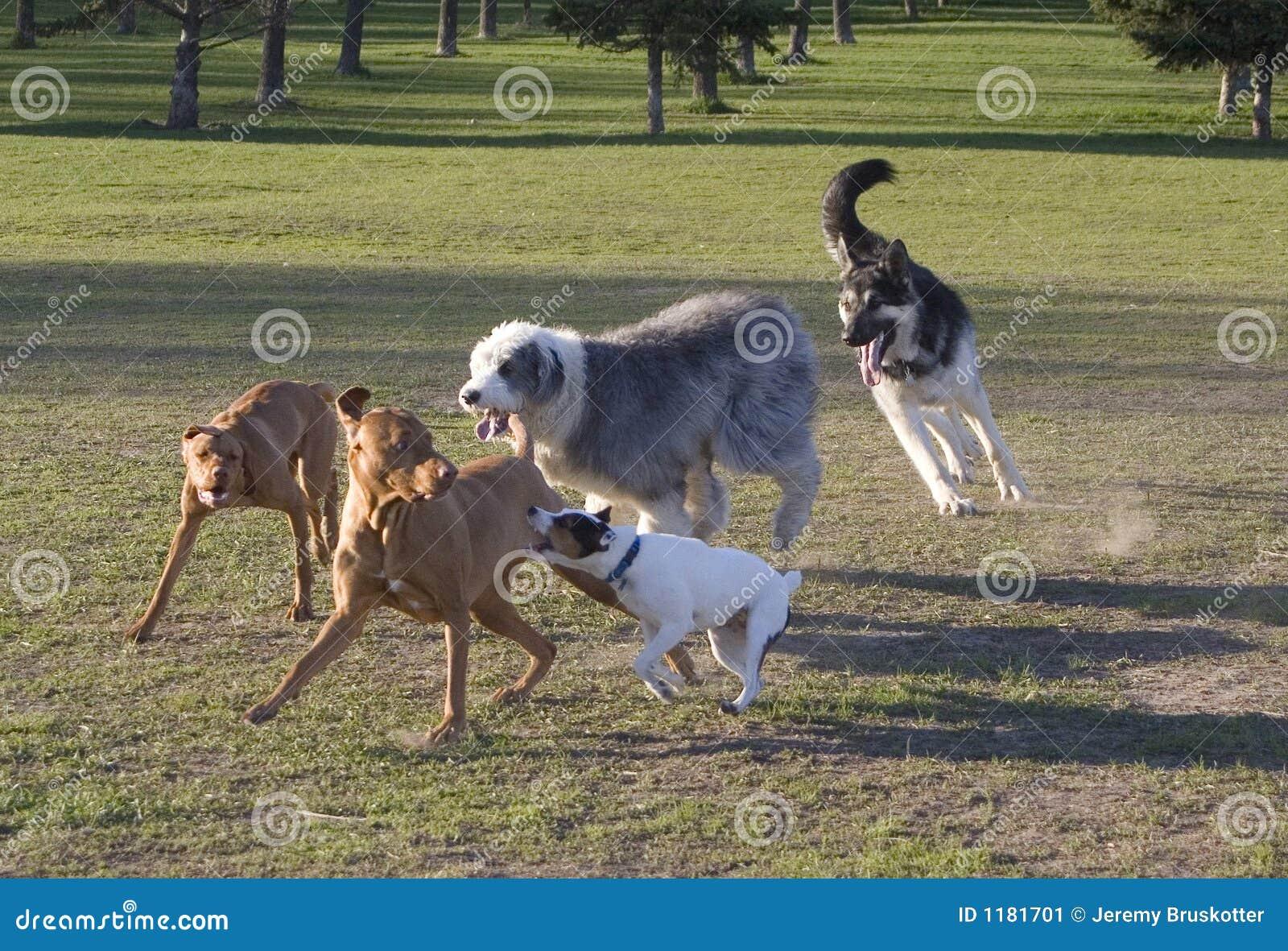 Hunden stojar