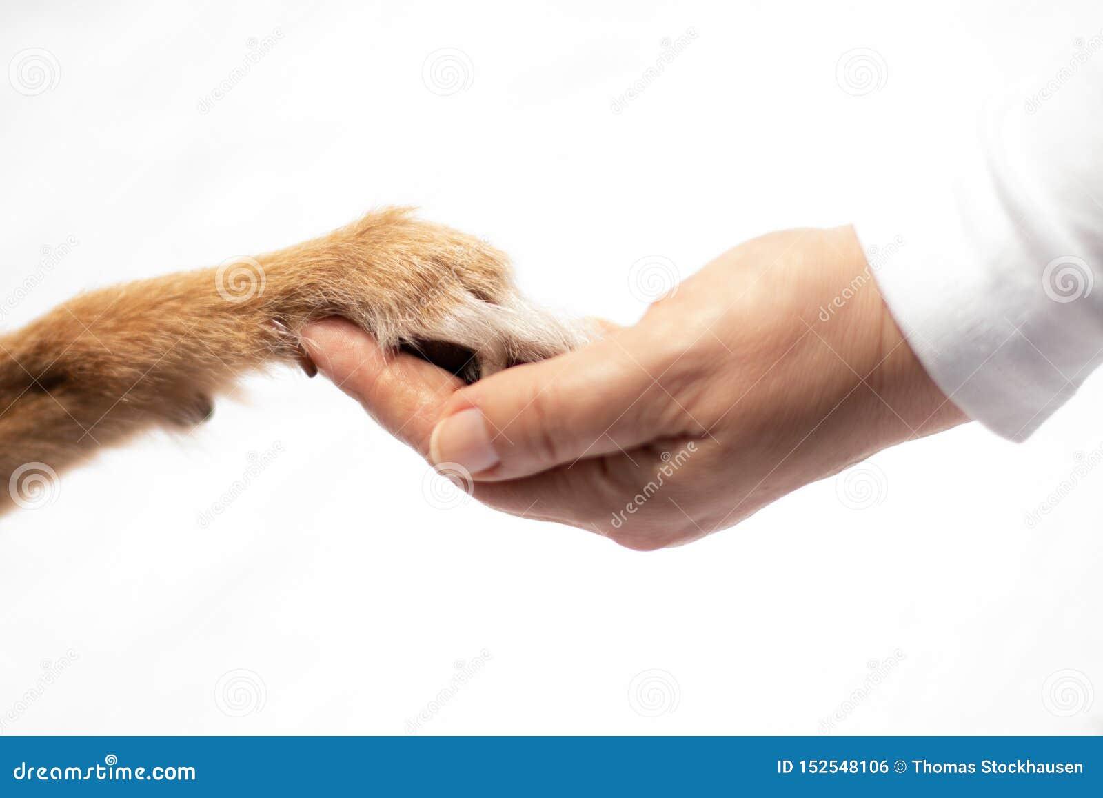 Hunden tafsar den mänskliga handen för handlag