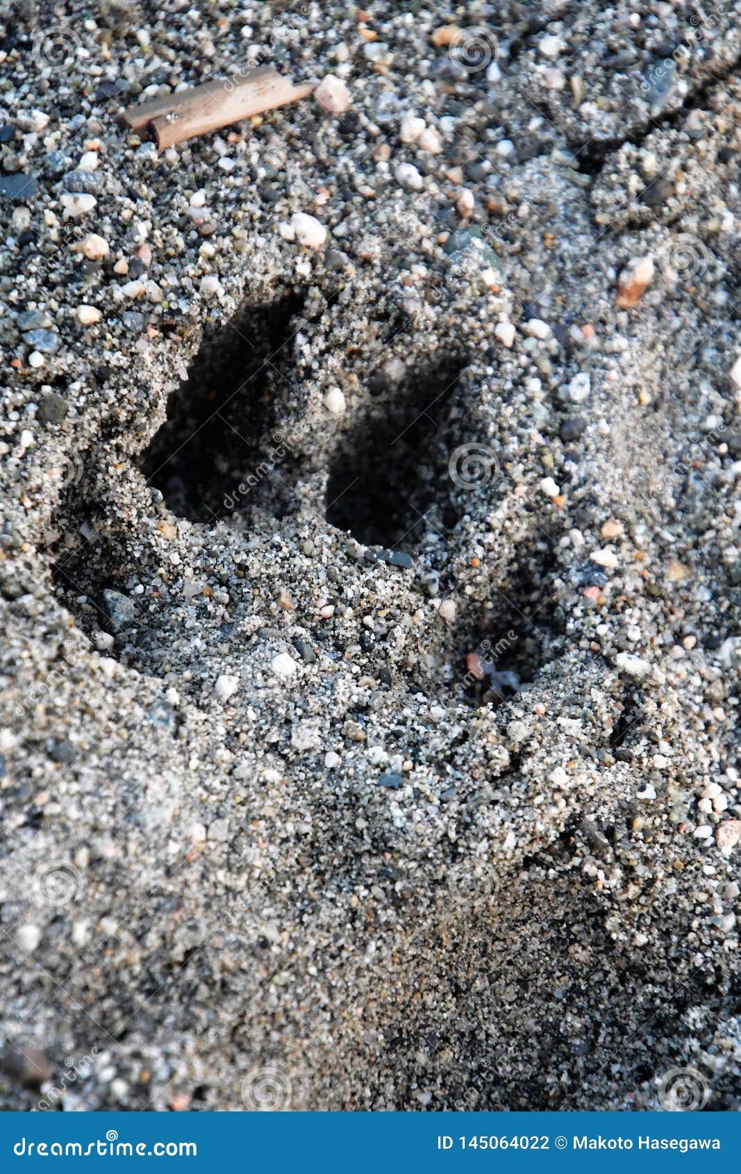 Hundepfotenabdruck ist- auf dem Strand
