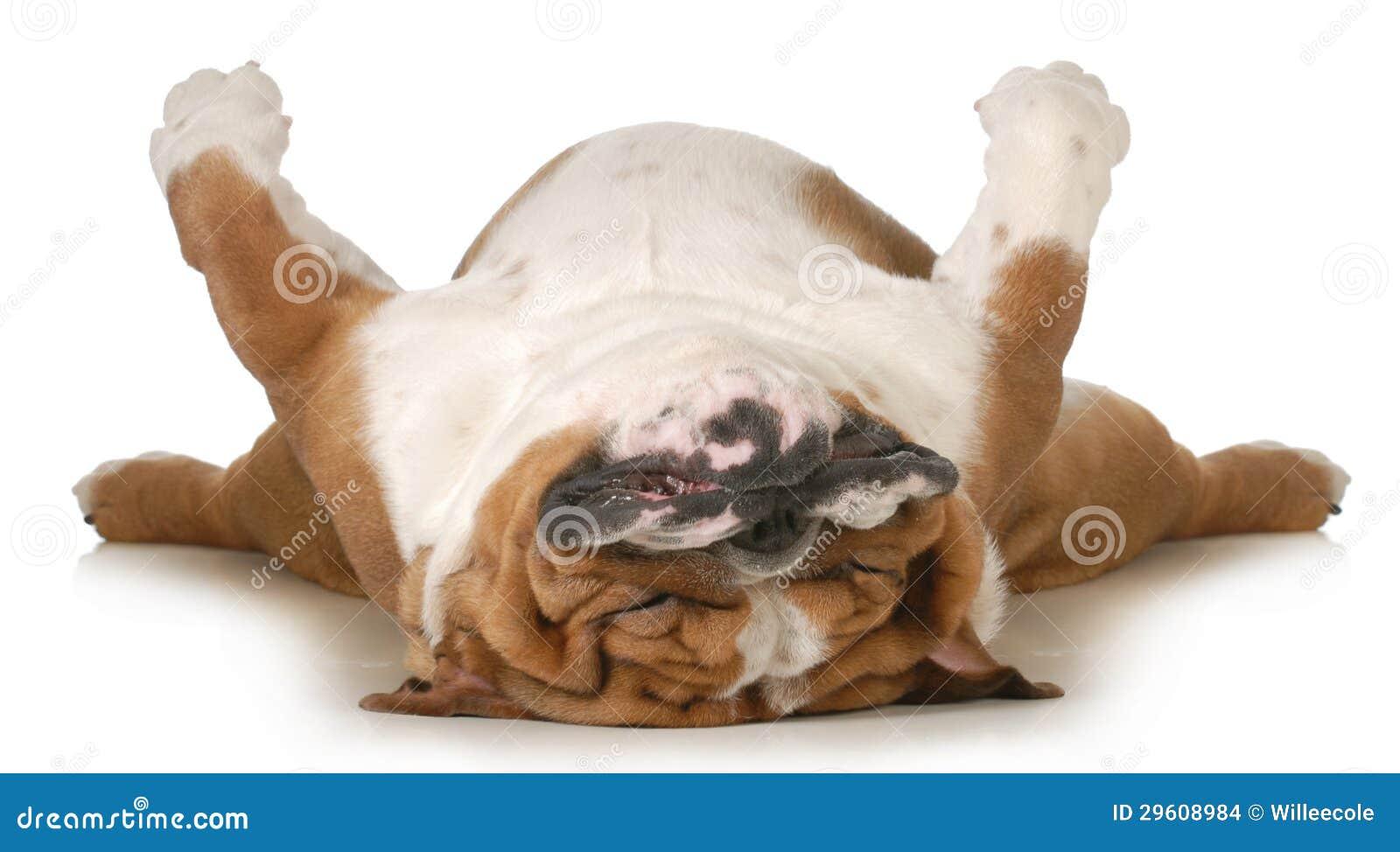 Hundeschlafen