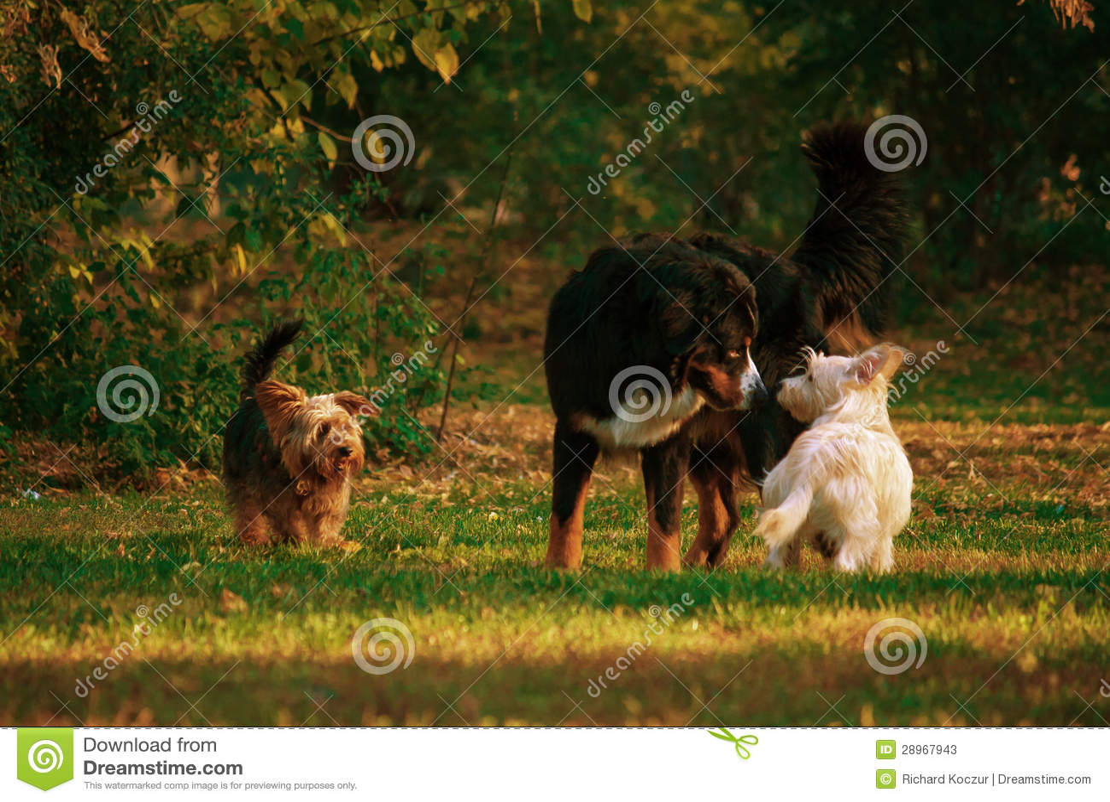 Hundesitzung