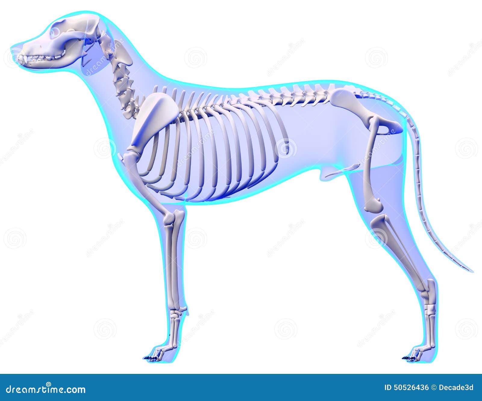 Ungewöhnlich 3d Hunde Anatomie Software 1.1 Kostenlos Herunterladen ...
