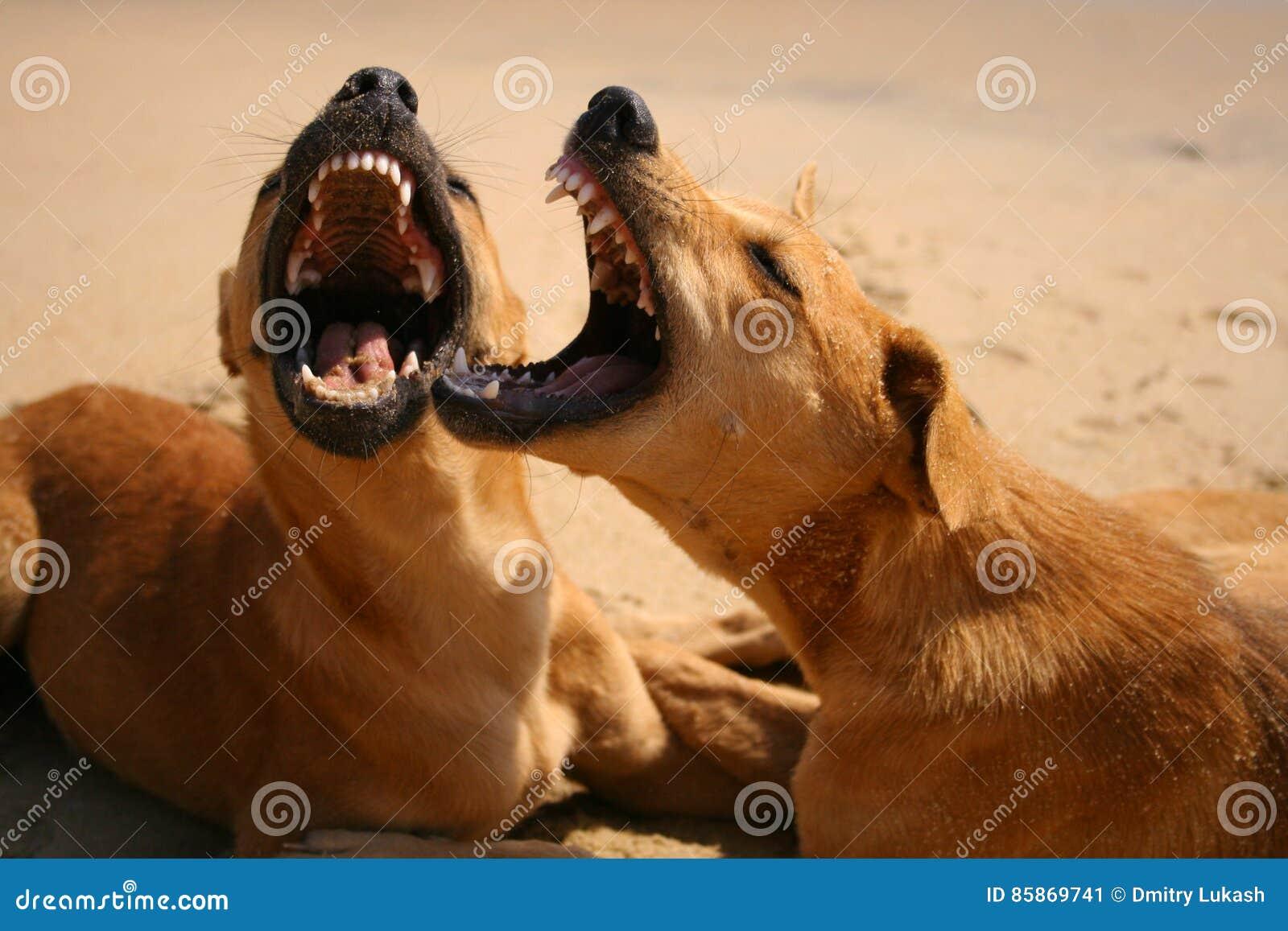 Hundespiel und -knurren