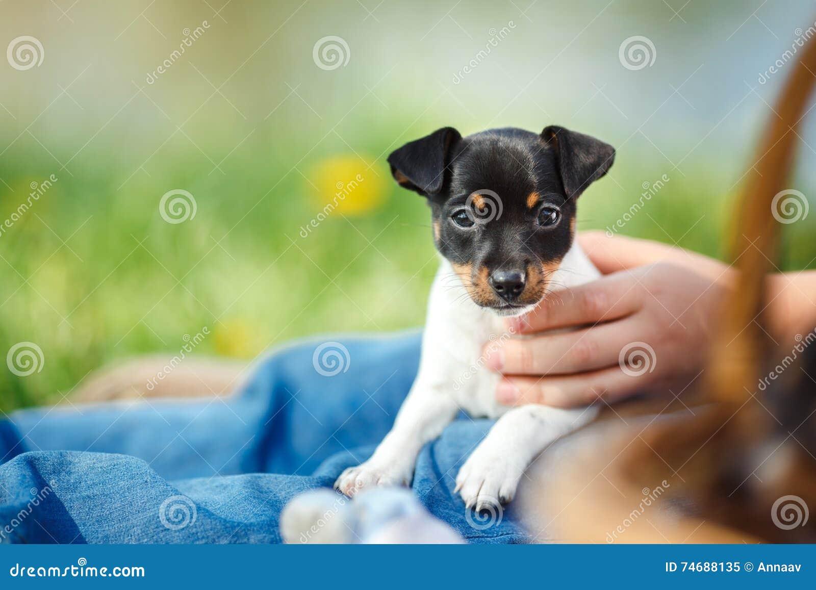 Hundezucht Spiele