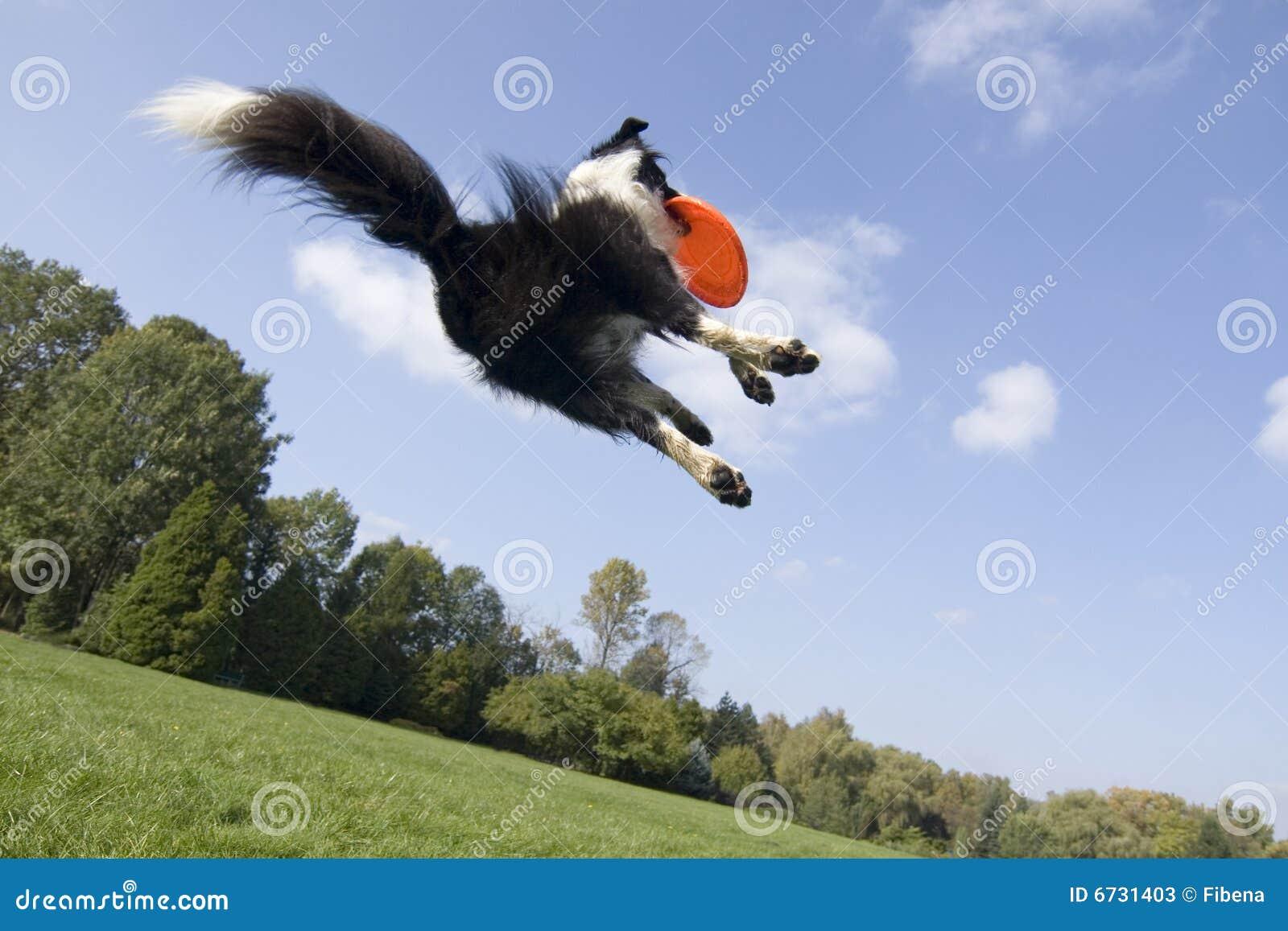 Hundflyg