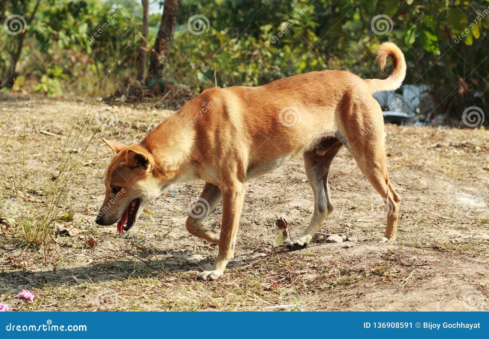Hundgehender Canidae in einem Wald