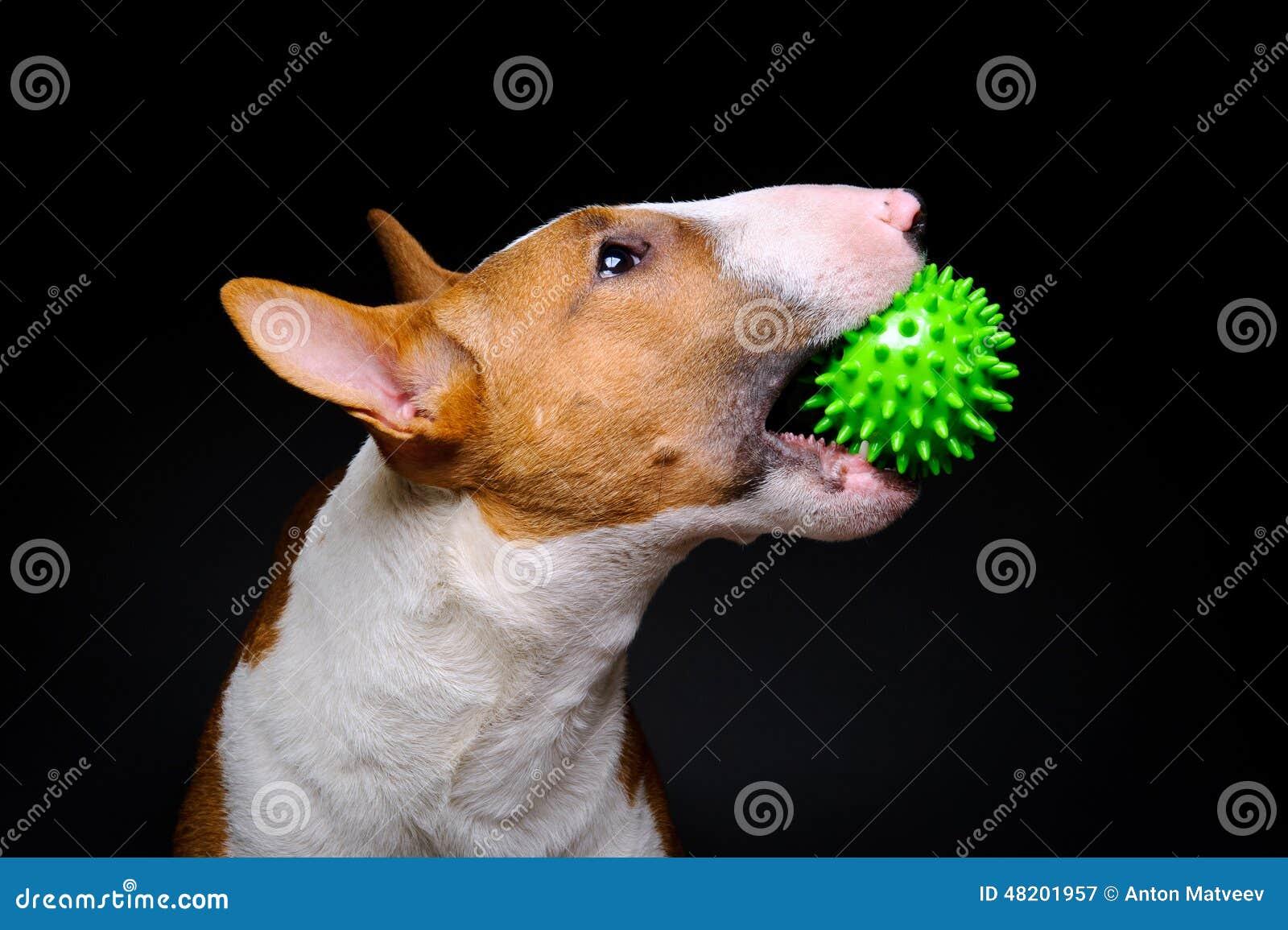 Hundgräsplanboll