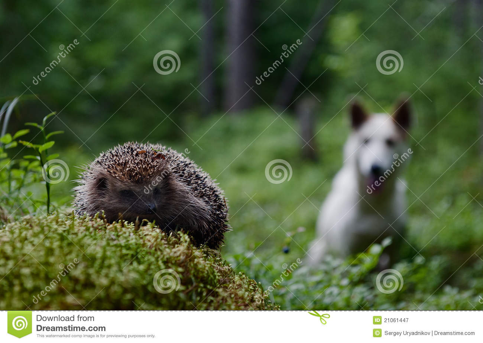 Hundigelkott