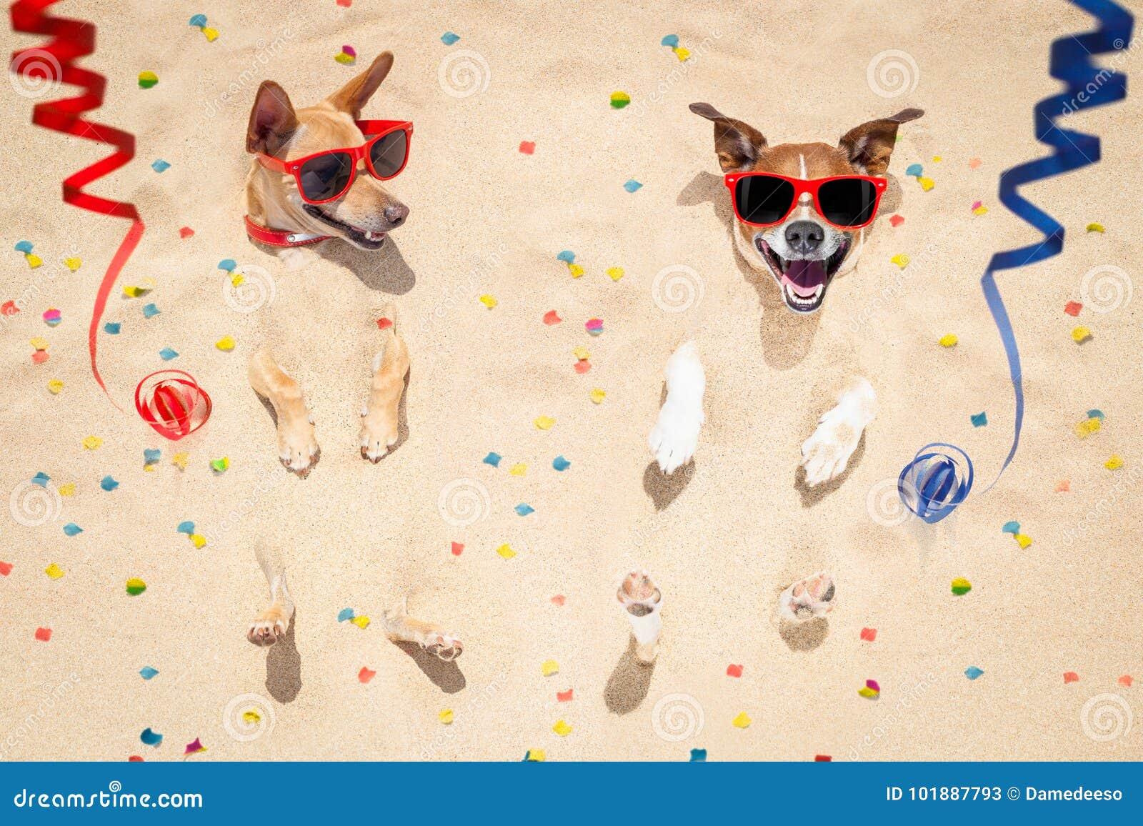 Hundkapplöpning för lyckligt nytt år på stranden