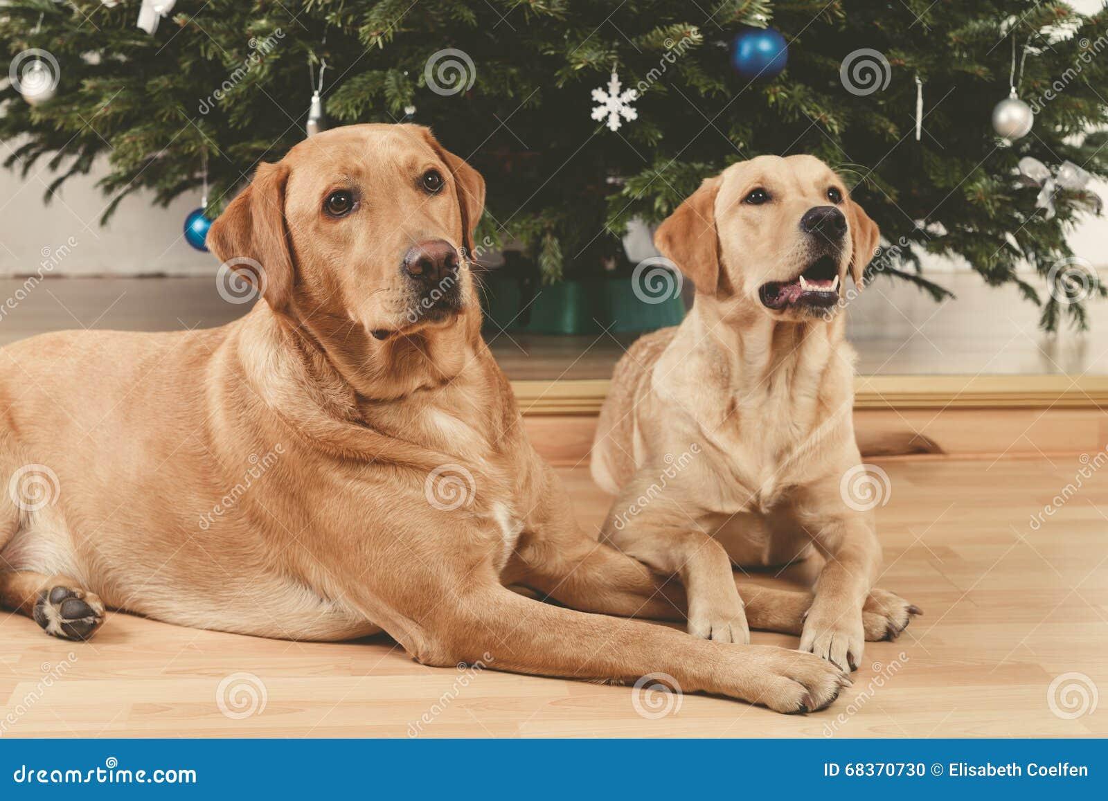 Hundkapplöpning och julgran