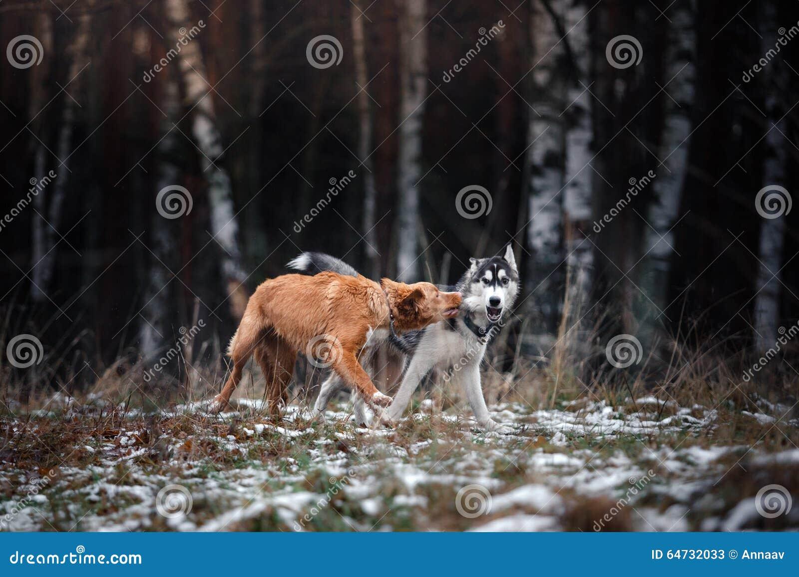Hundkapplöpningen går i parkera i vinter