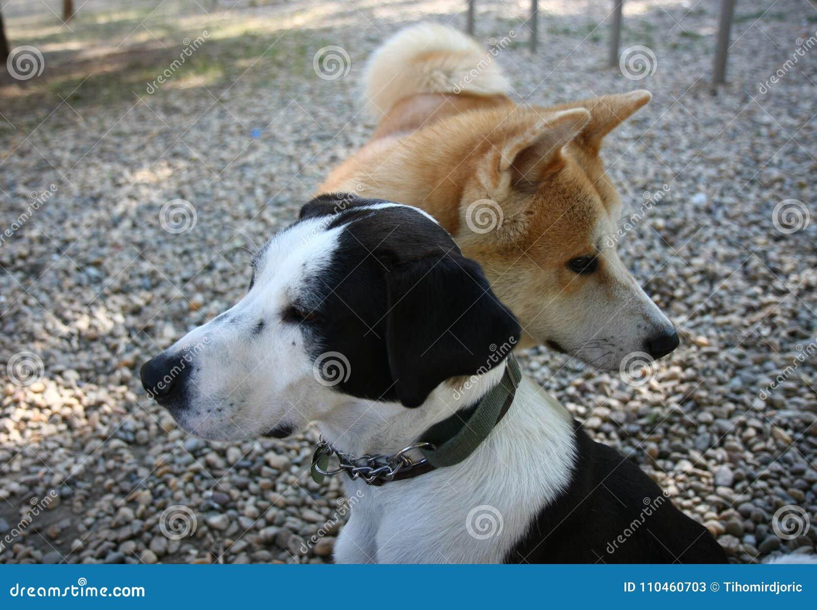 Hundkapplöpningen i hund parkerar