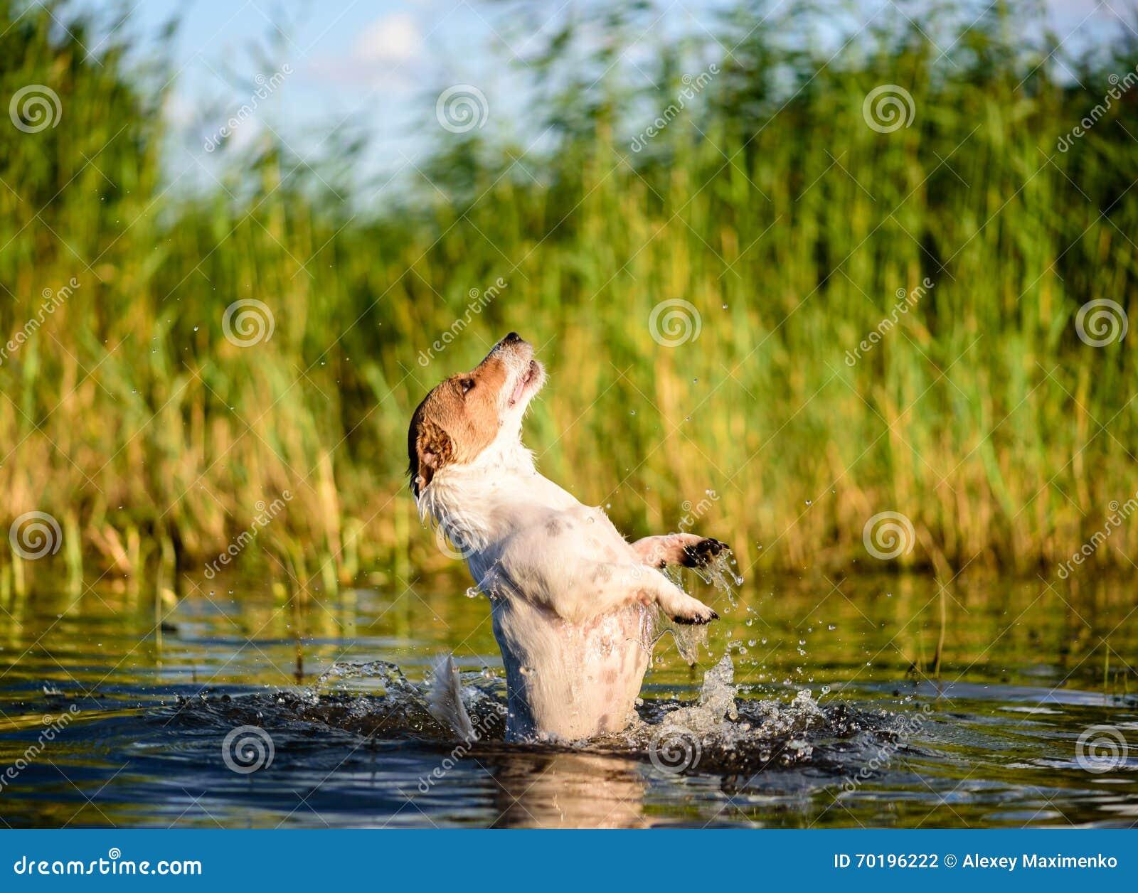 Hundkapplöpningsommaraktiviteter på stranden i vatten: simning banhoppning som plaskar