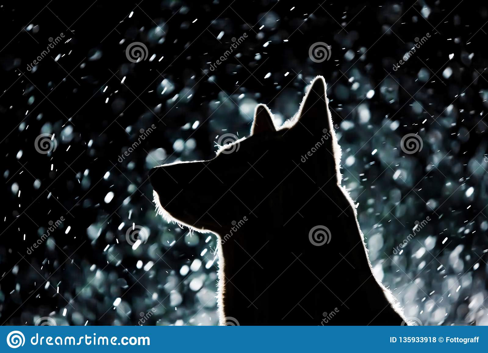 Hundkontur i billyktorna