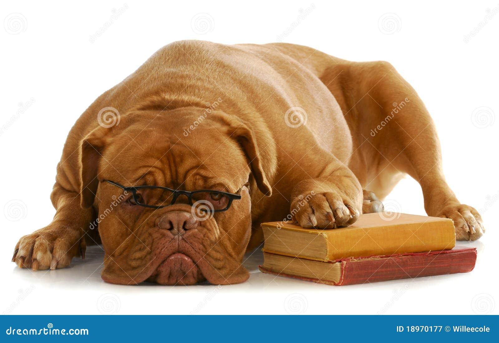 Hundobedienceutbildning