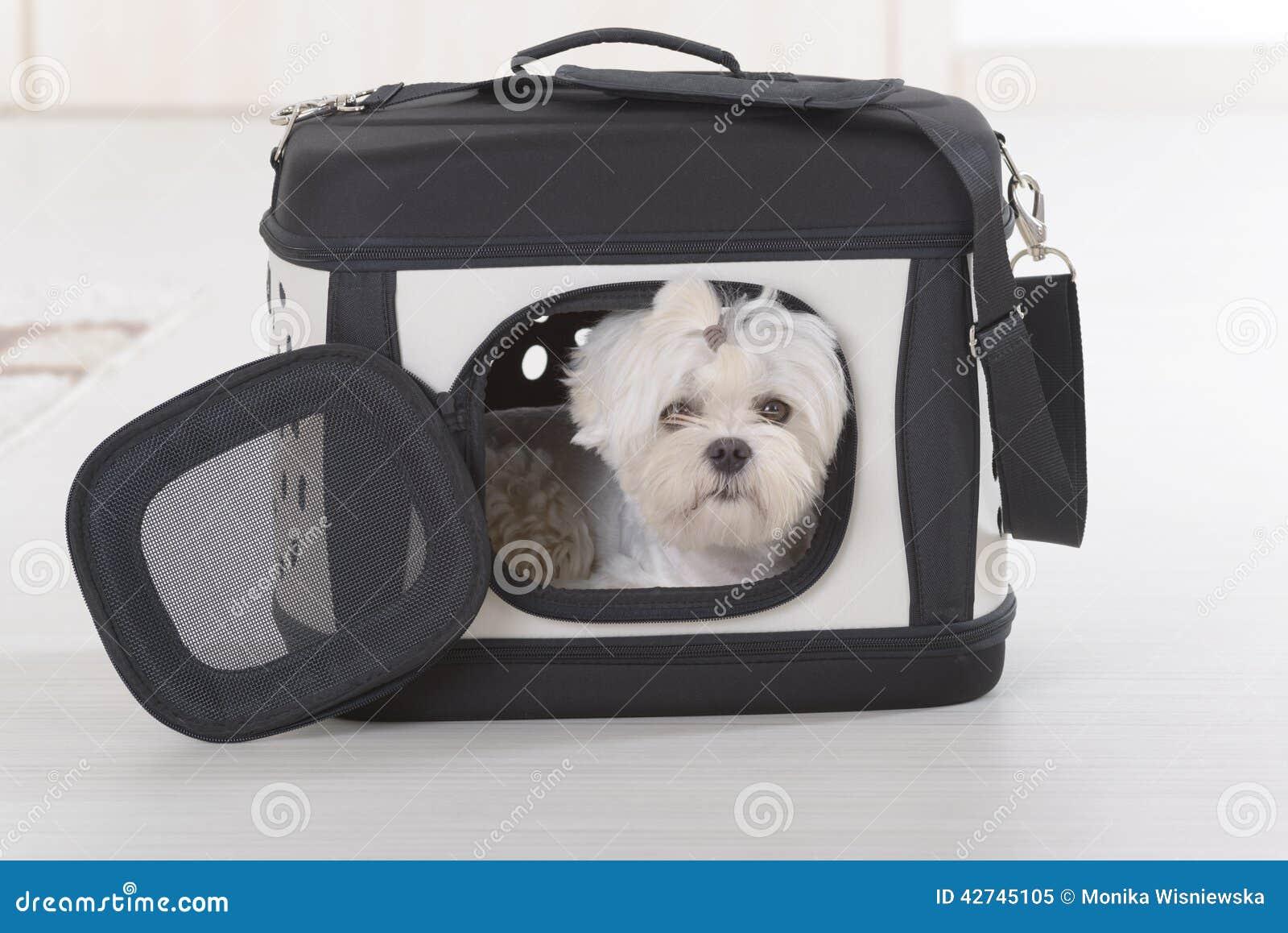 Hundsammanträde I Biltransport Fotografering för Bildbyråer