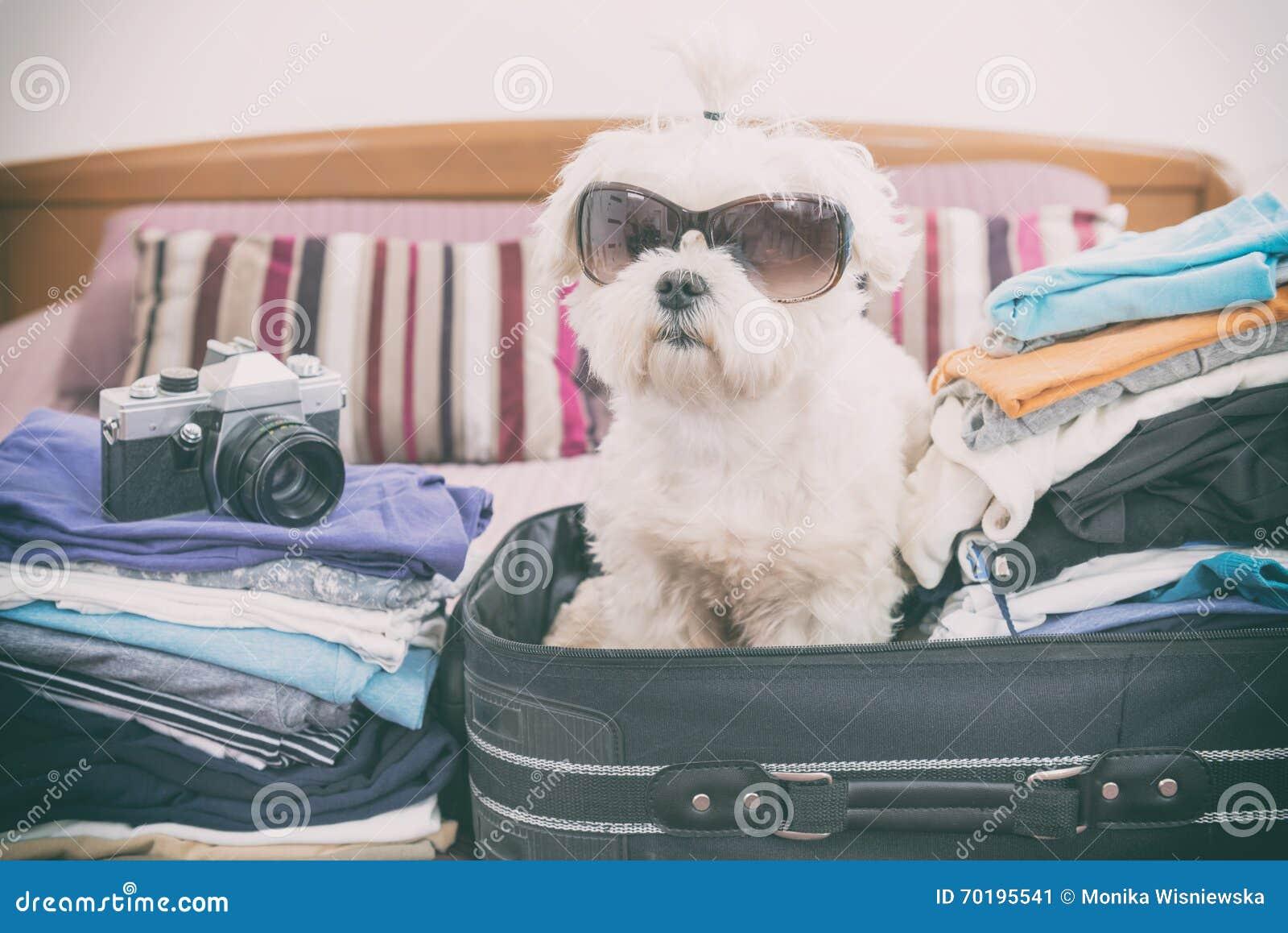 Hundsammanträde i resväskan